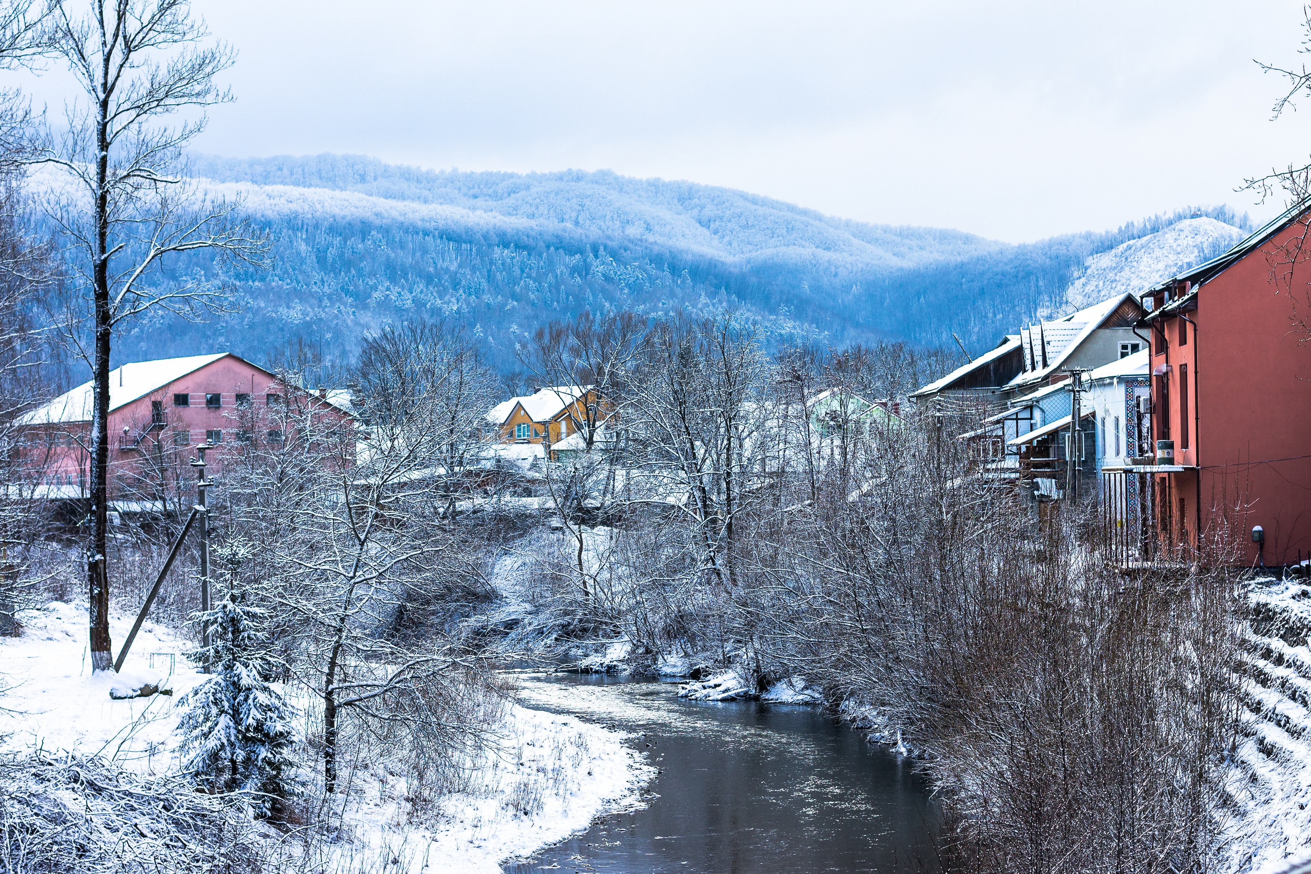 River Surround by Bare Tree Top View, Cold, Mountains, Winter, Weather, HQ Photo