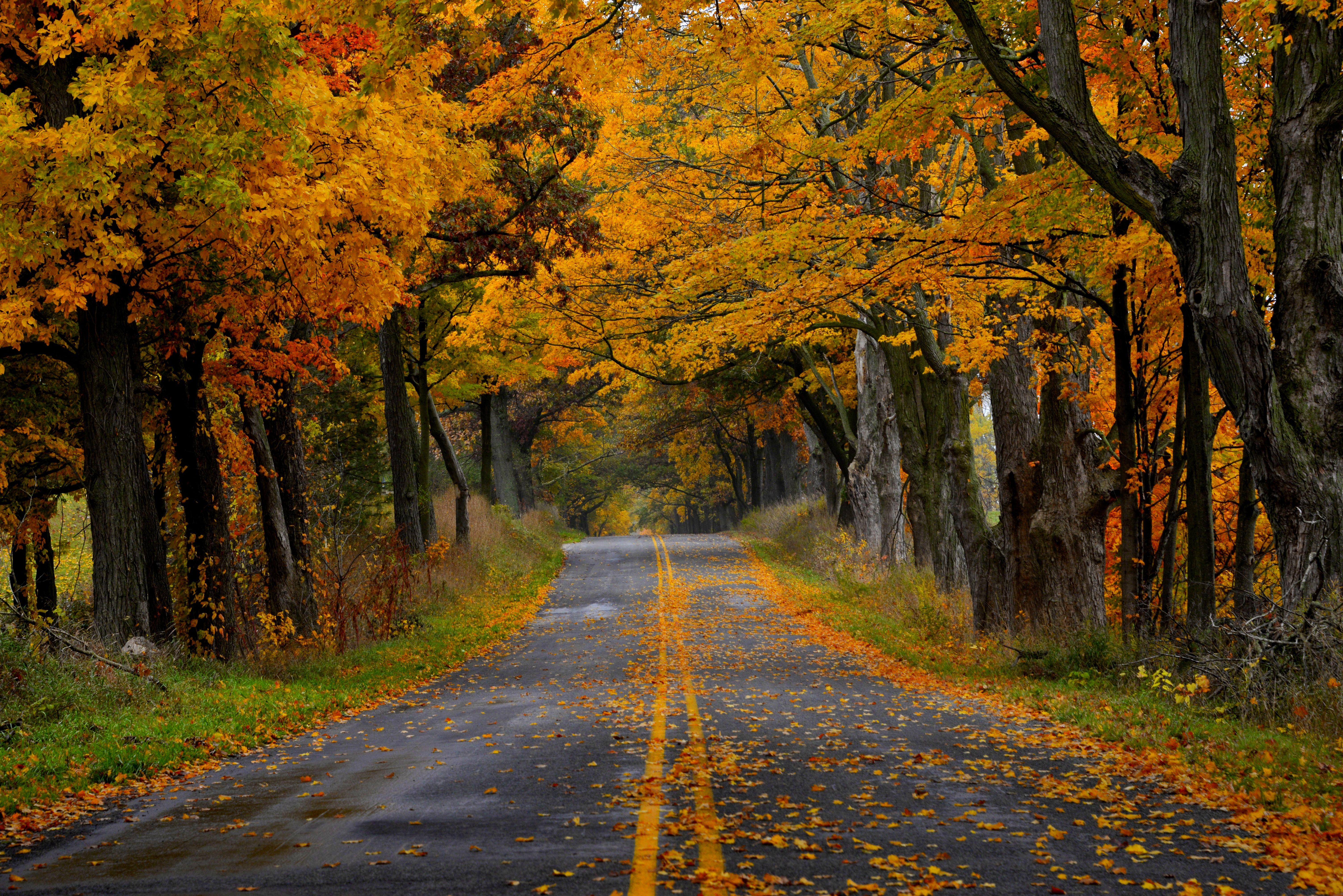 Road in autumn photo