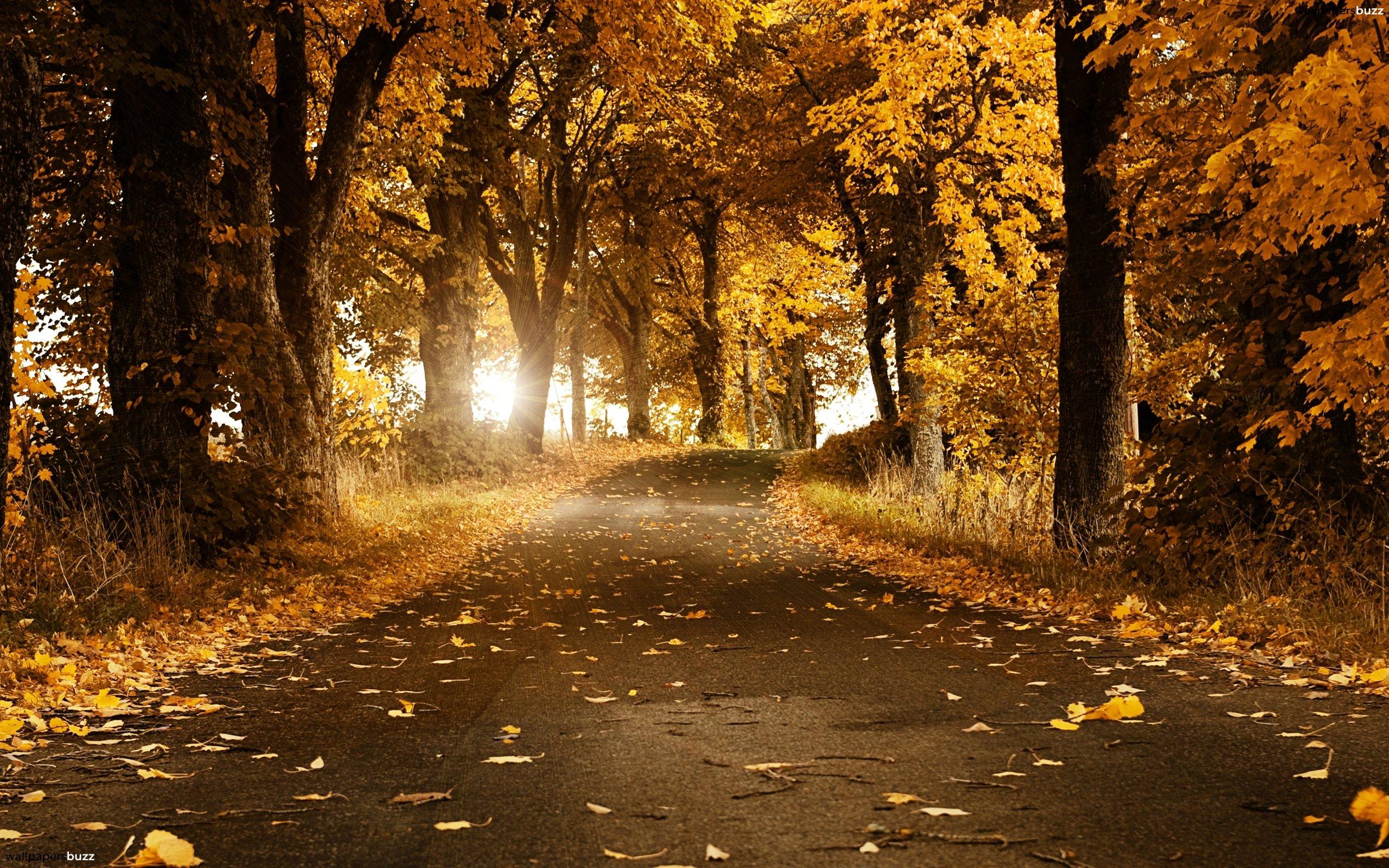 Autumn Road HD Wallpaper