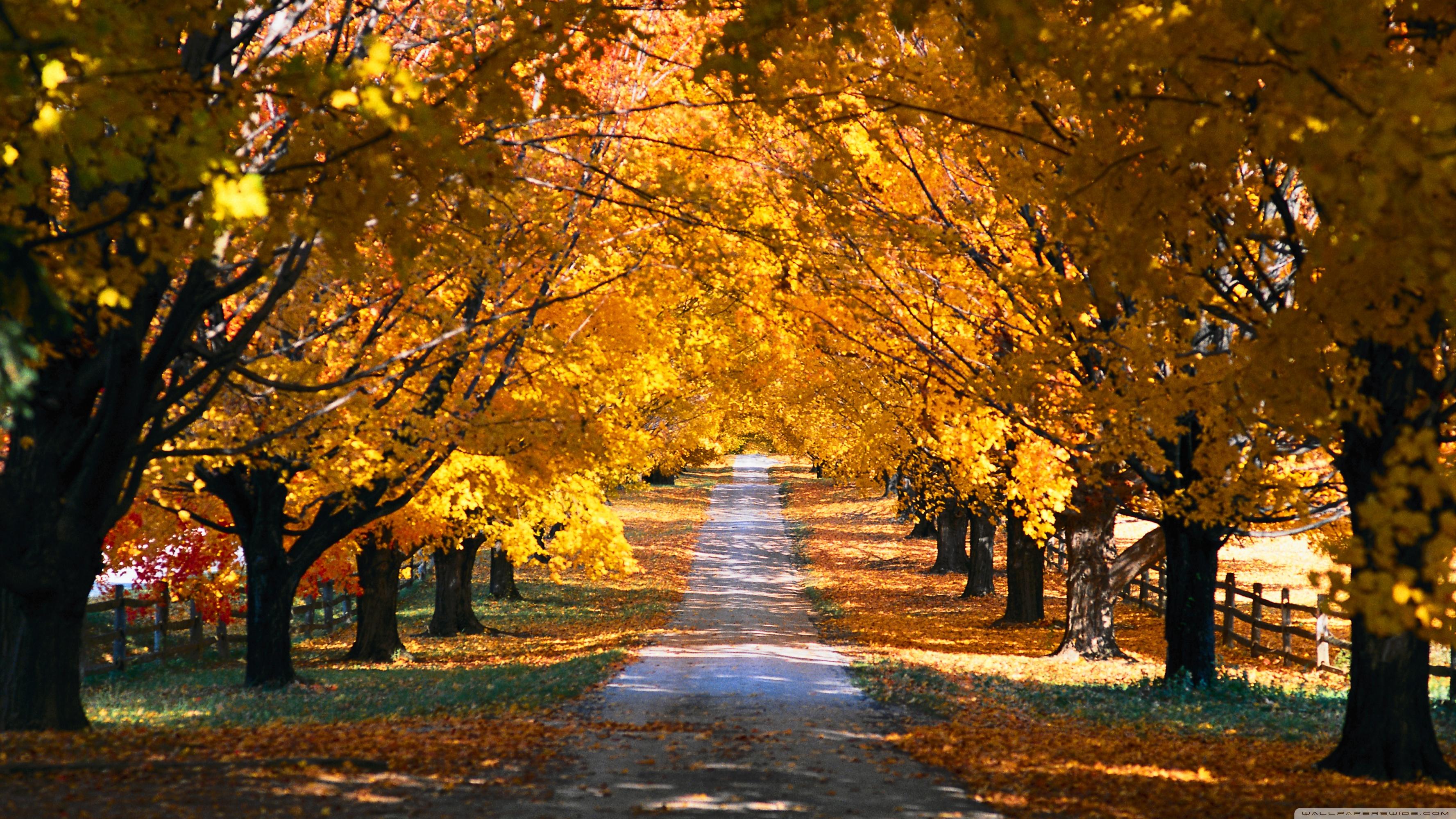 Tree Tunnel Road Autumn ❤ 4K HD Desktop Wallpaper for 4K Ultra HD ...
