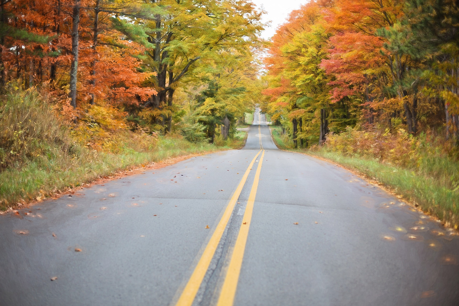 Road in Autumn, Autumn, Color, Fall, Fallen, HQ Photo