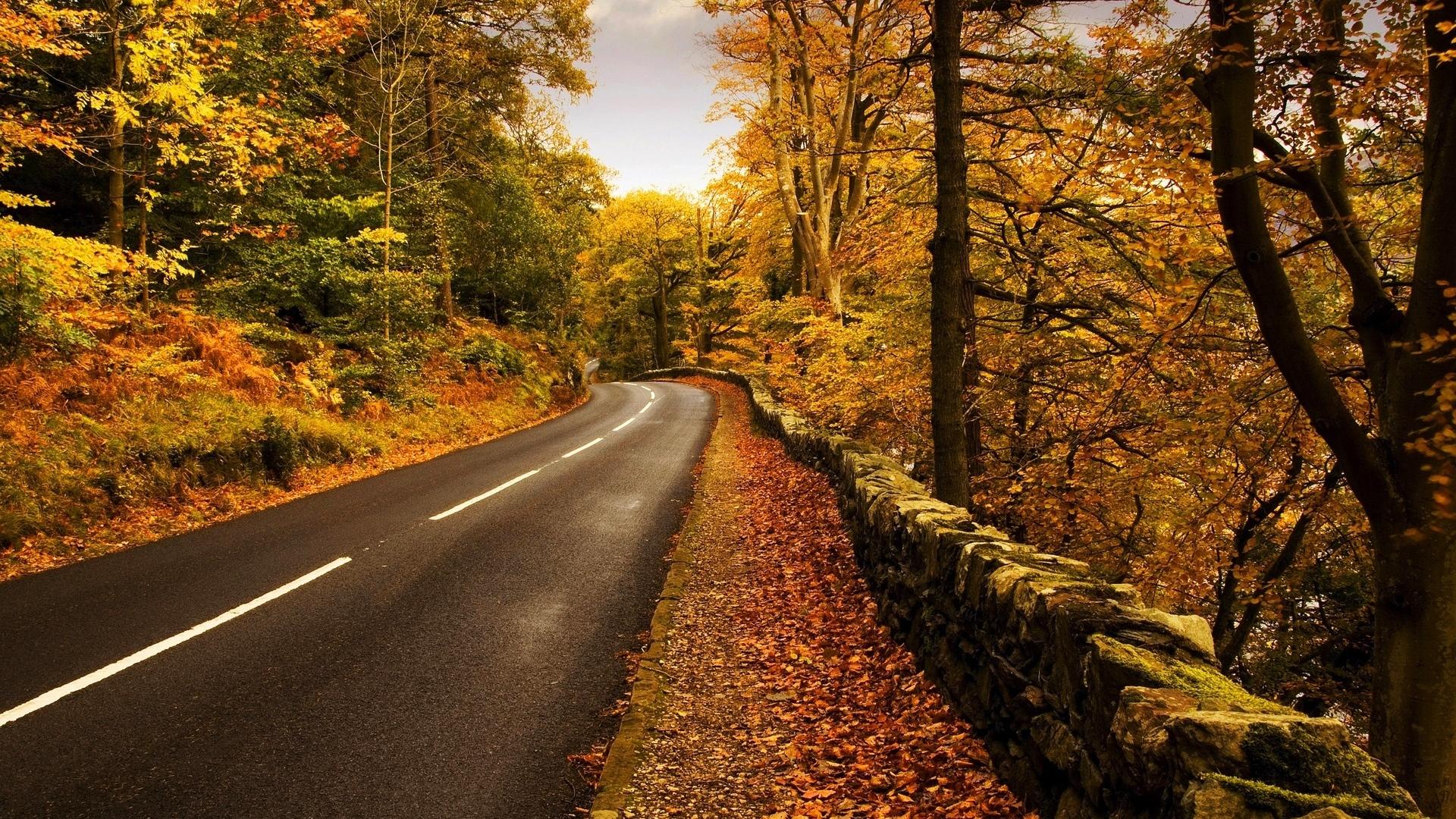 Download Wallpaper 1920x1080 road, roadside, autumn, leaves ...