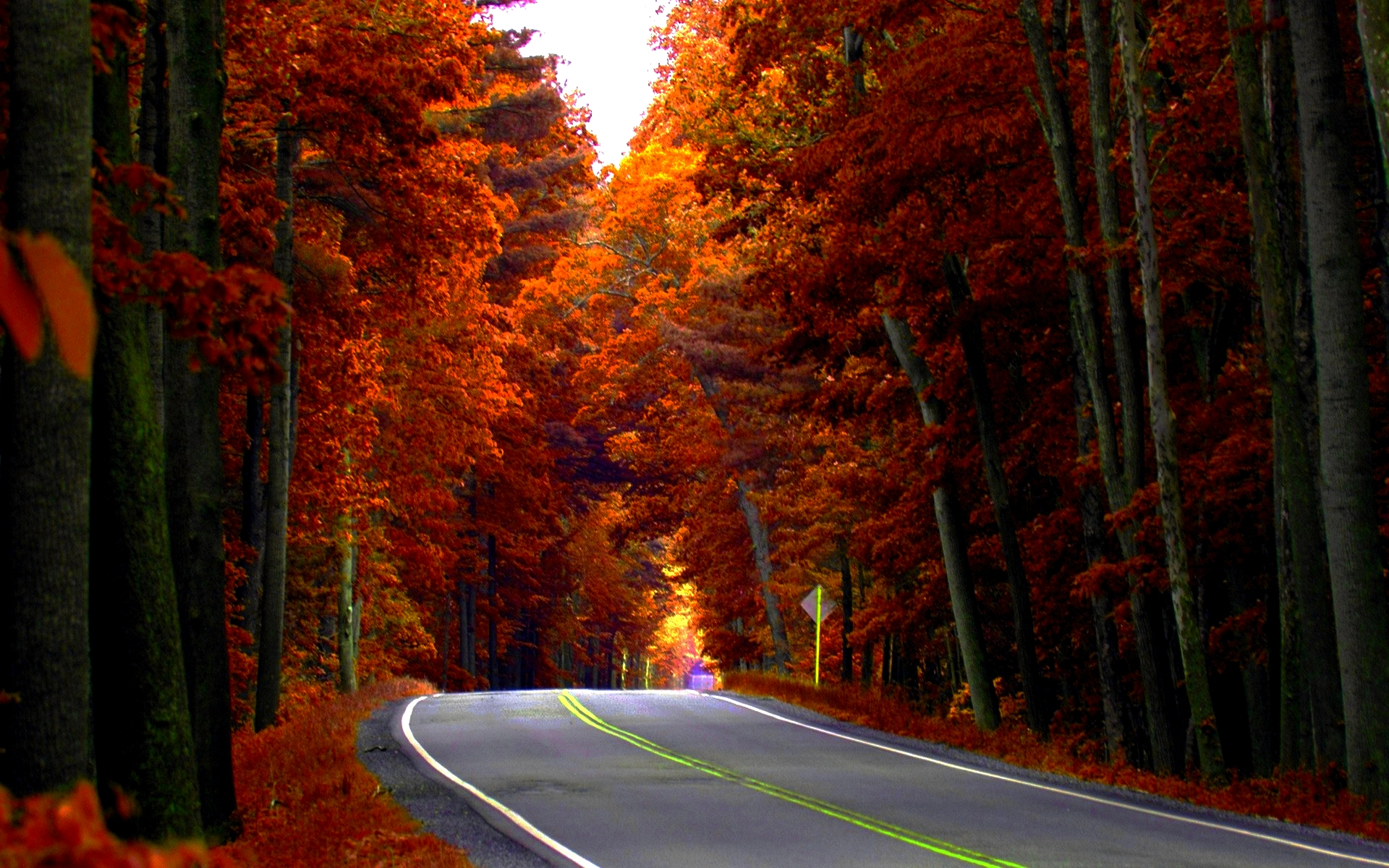 Autumn Road HD Wallpaper, Background Images