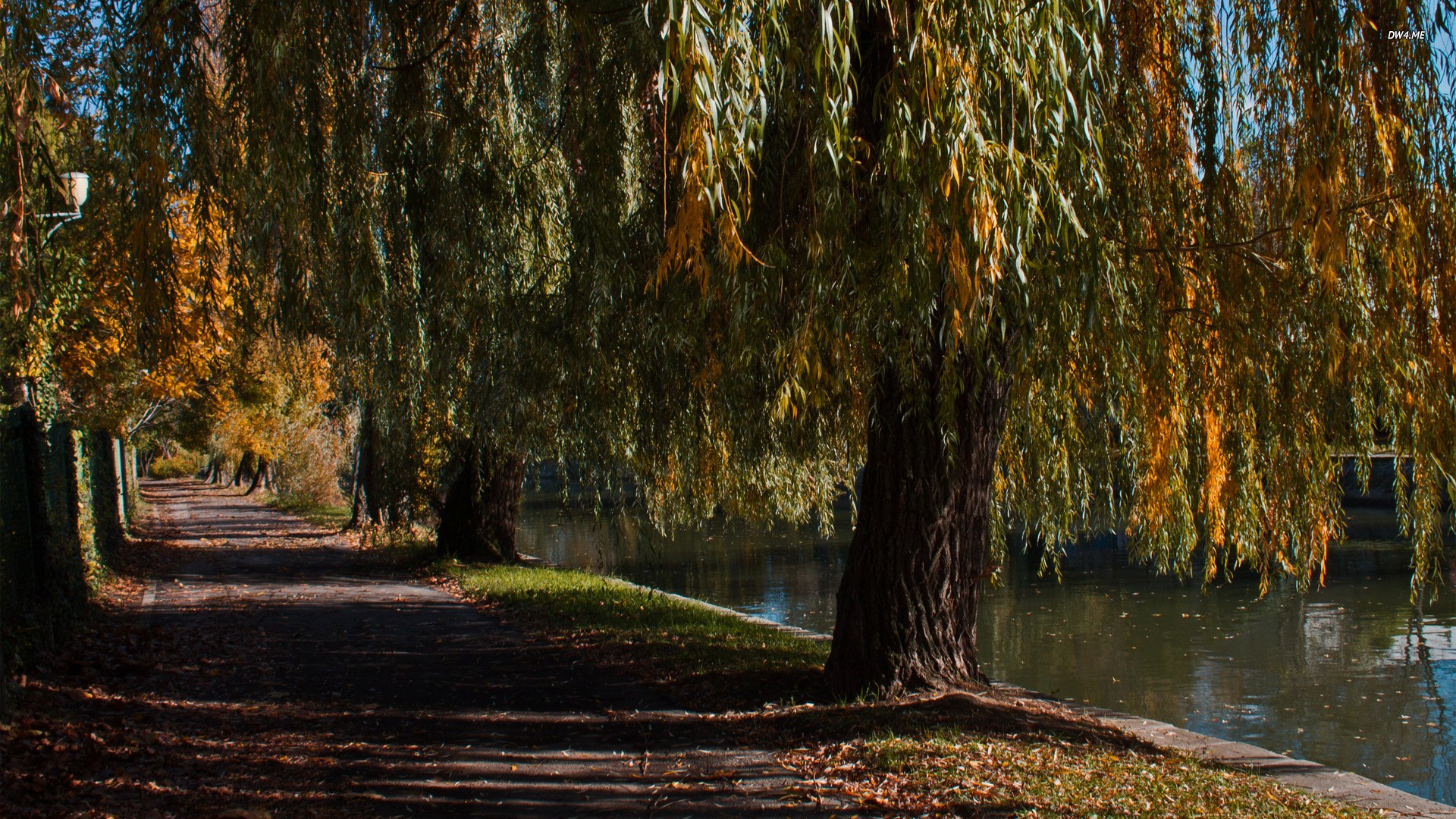 Lake: Lakeside Road Trees Alley River Leaves Autumn Photography Lake ...