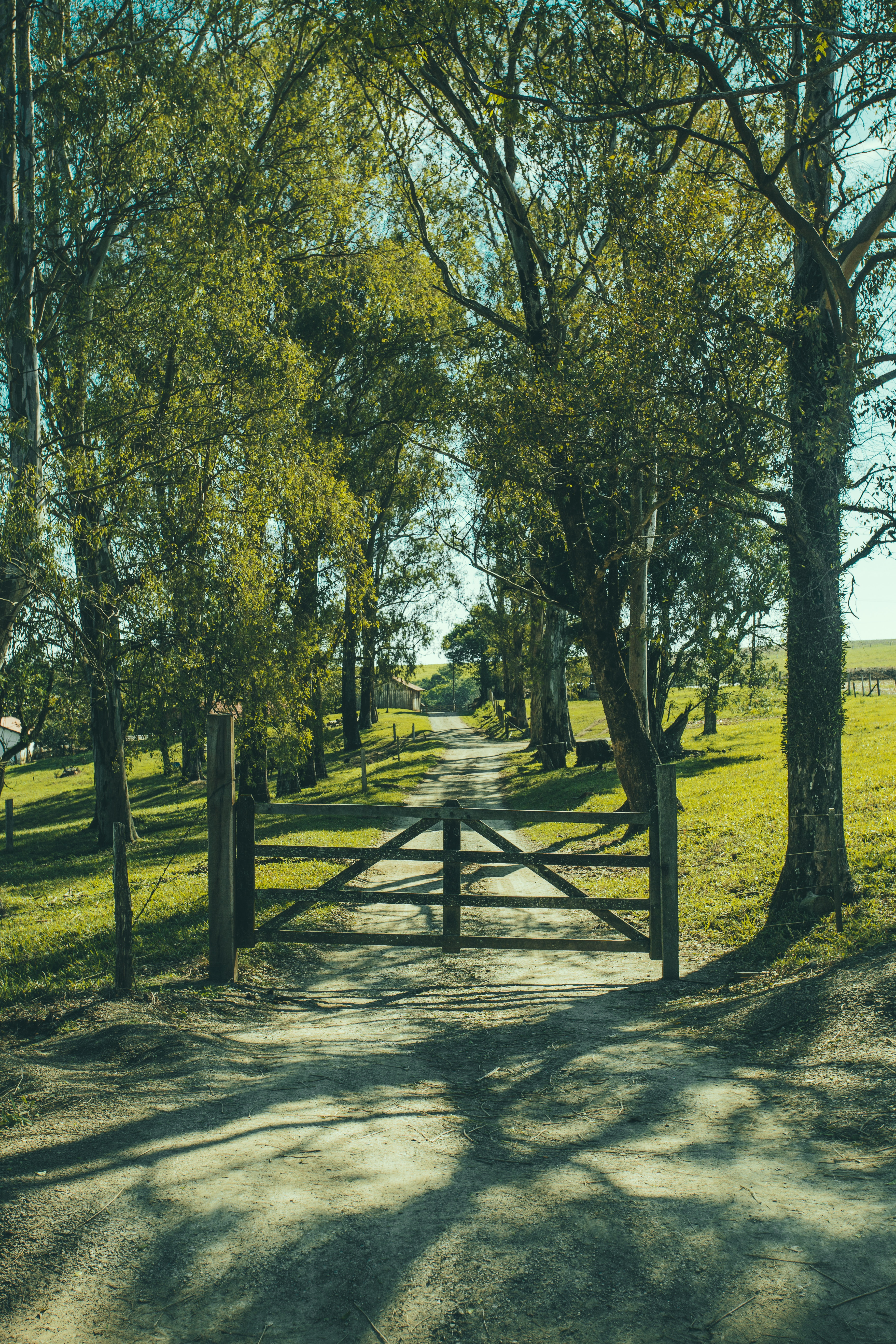 Road with fence in between of green trees photo
