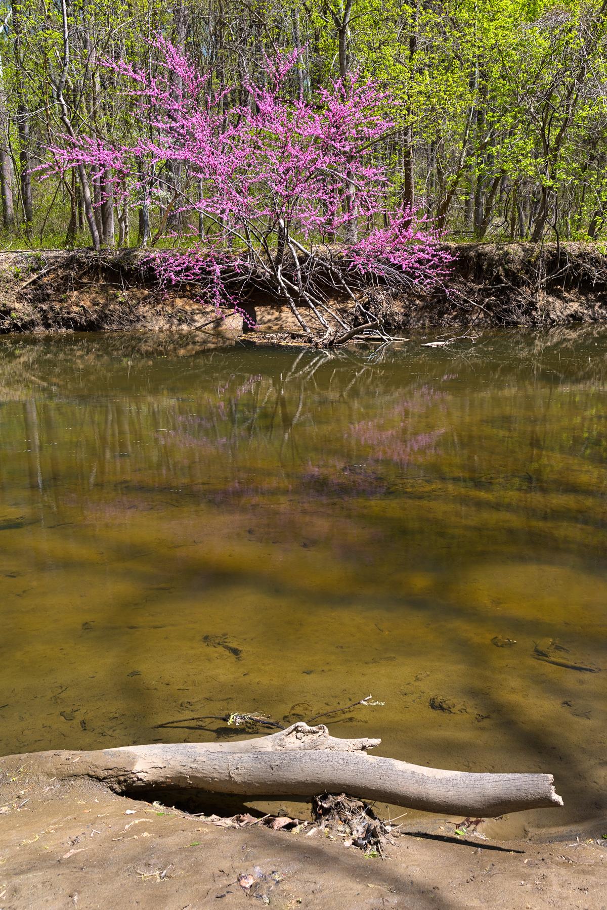 Rock creek stream & foliage - green & pi photo