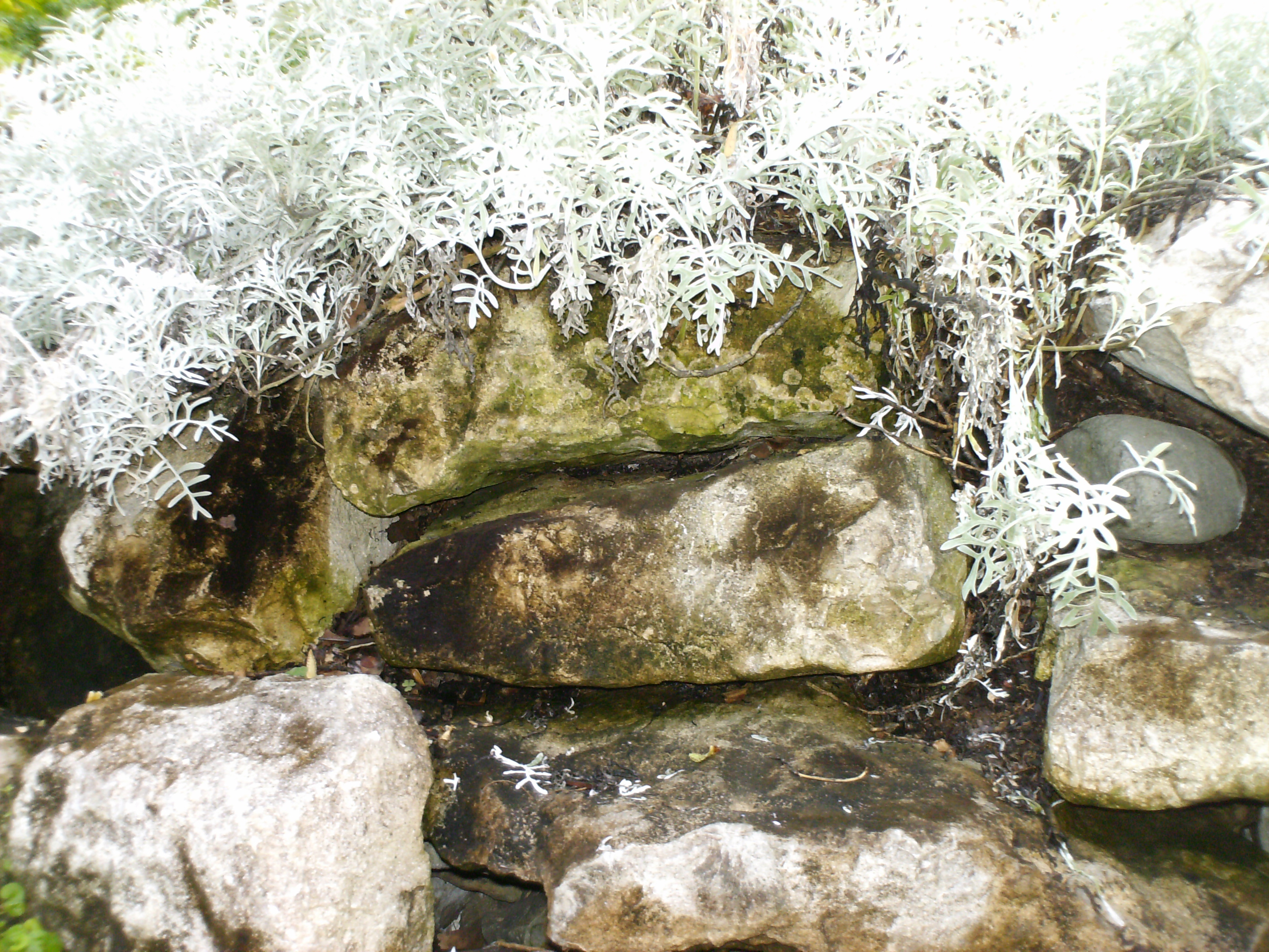 Rocks, Moss, Plants, Stone, Texture, HQ Photo
