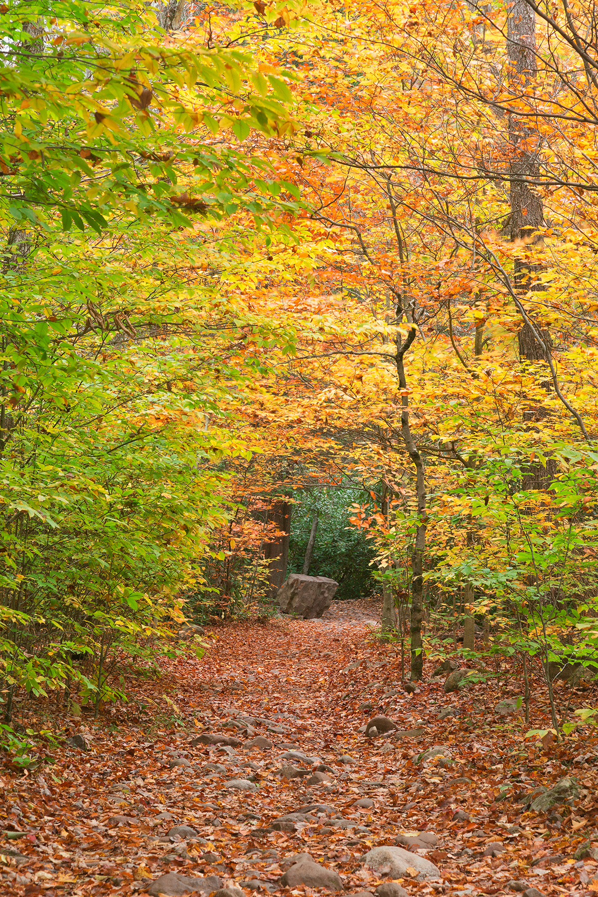 Rocky autumn forest trail photo