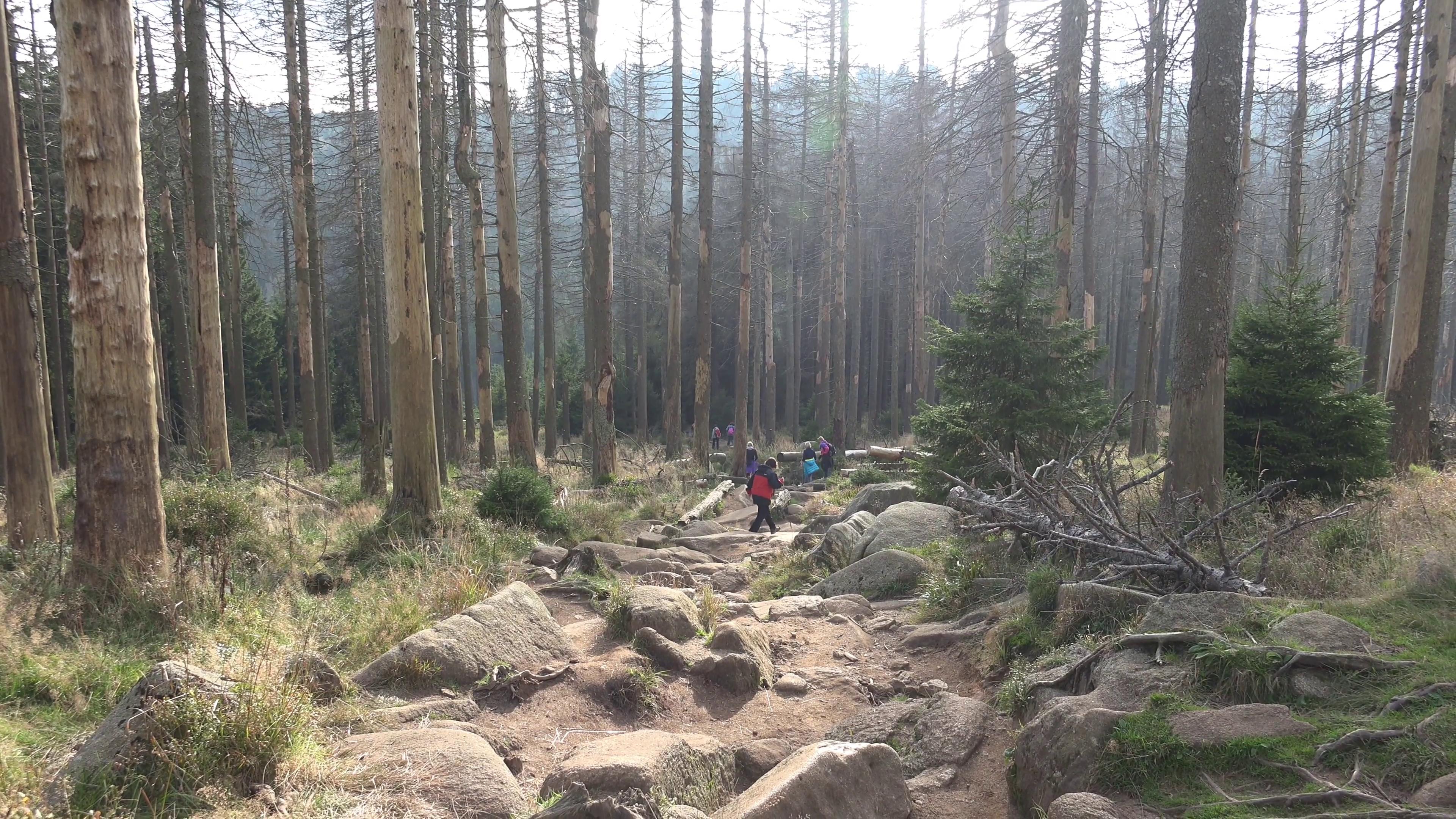 4k Rocky path climbing to Brocken mountain range Harz Stock Video ...
