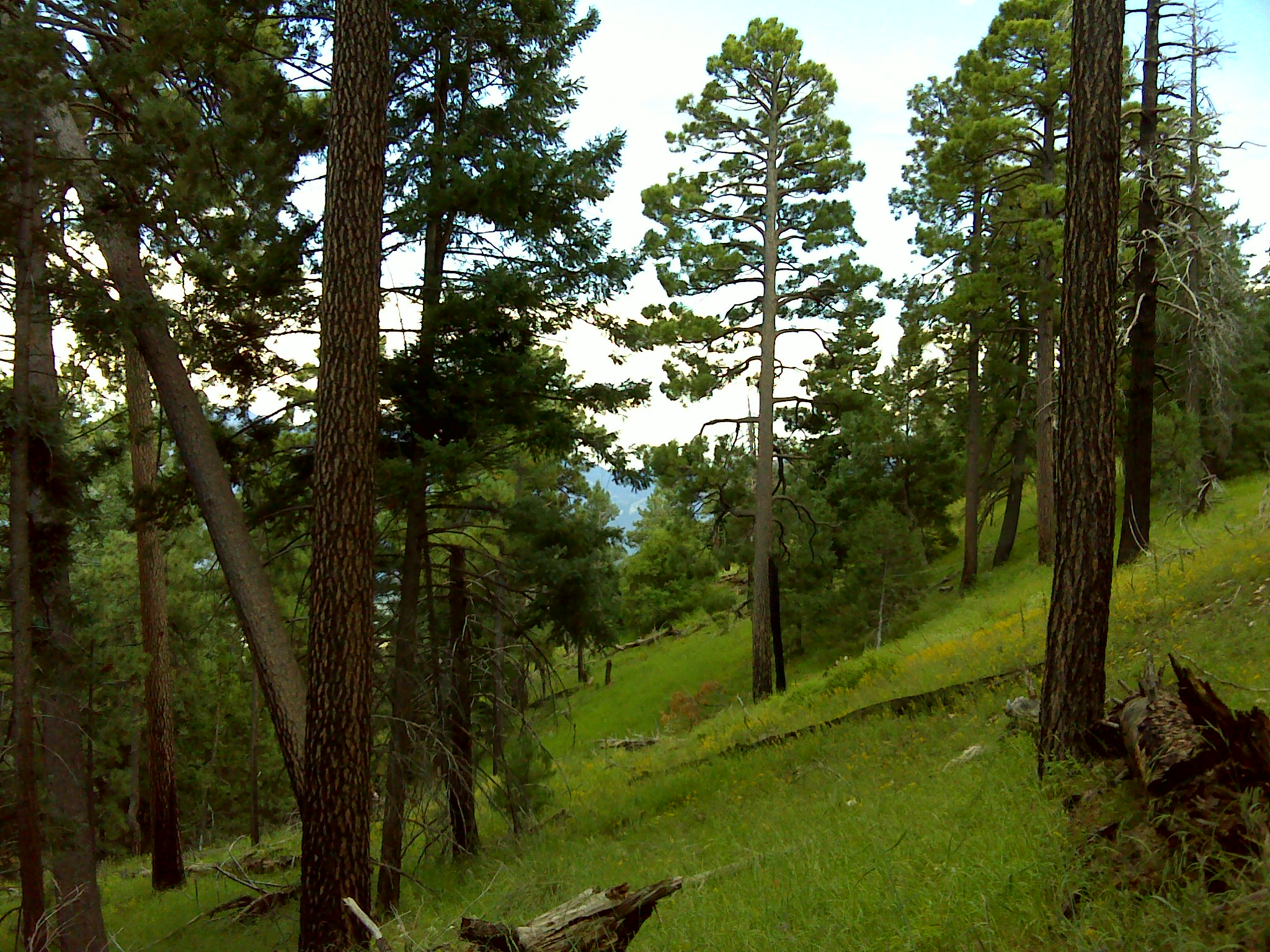 Southern Rocky Mountain Dry-Mesic Montane Mixed Conifer Forest and ...