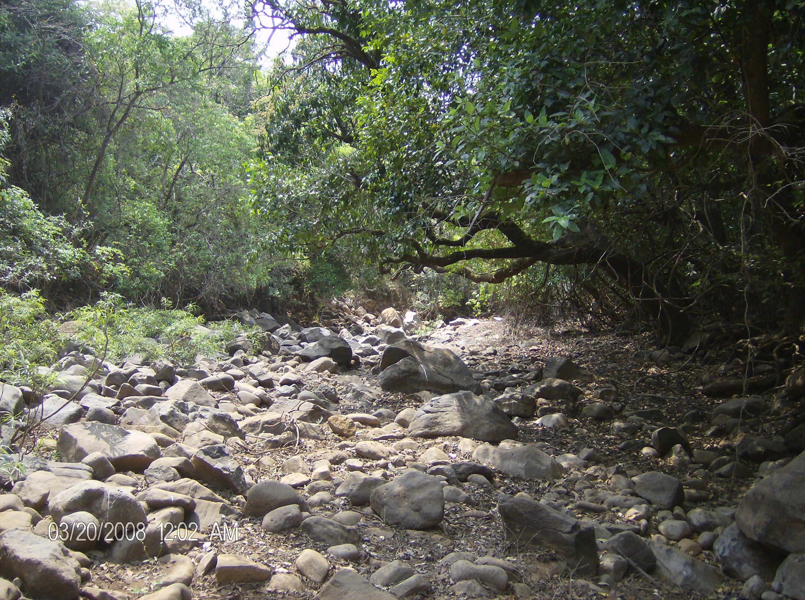 Rocky woodland, Forest, Landscape, Nature, Plants, HQ Photo