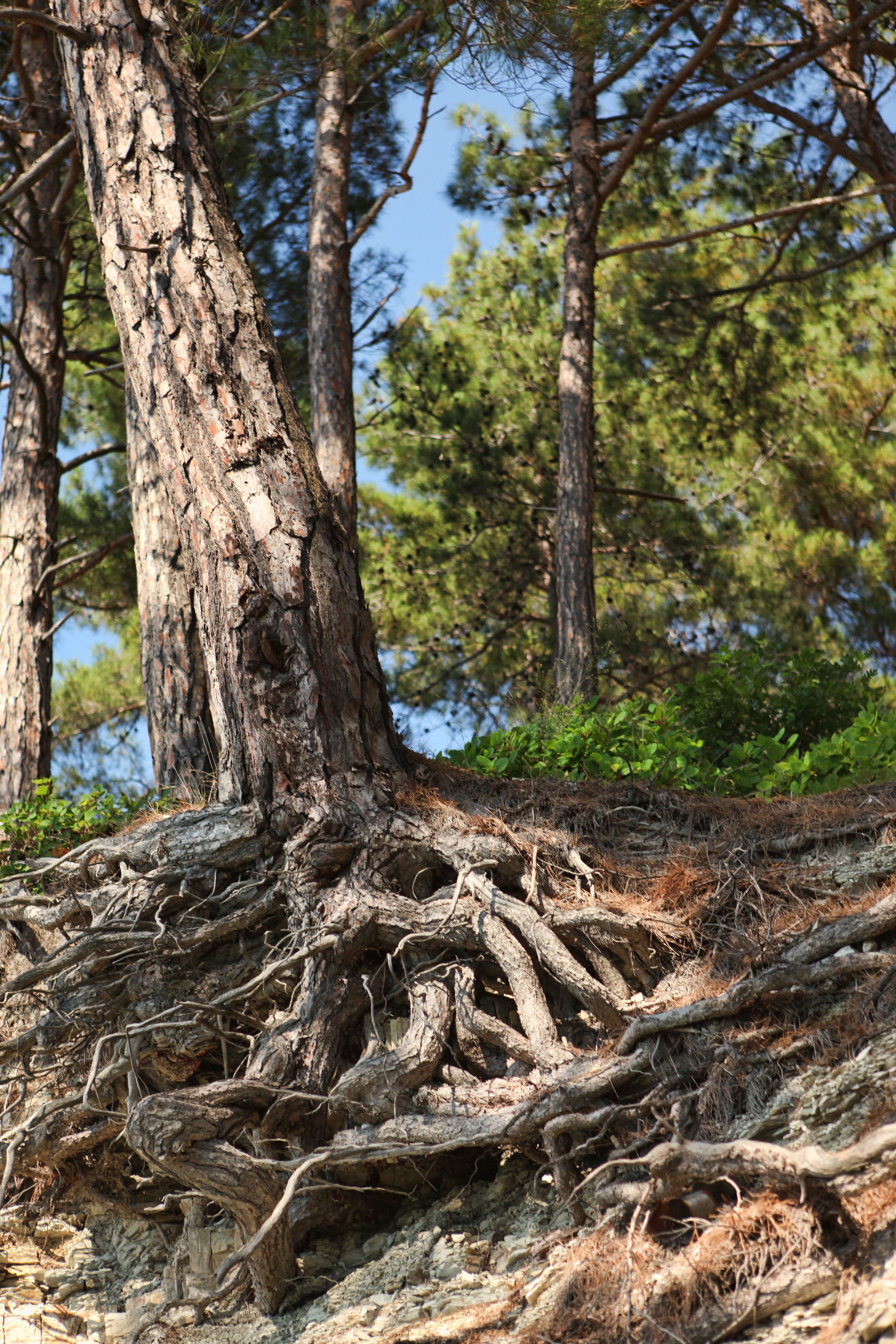 Root system photo