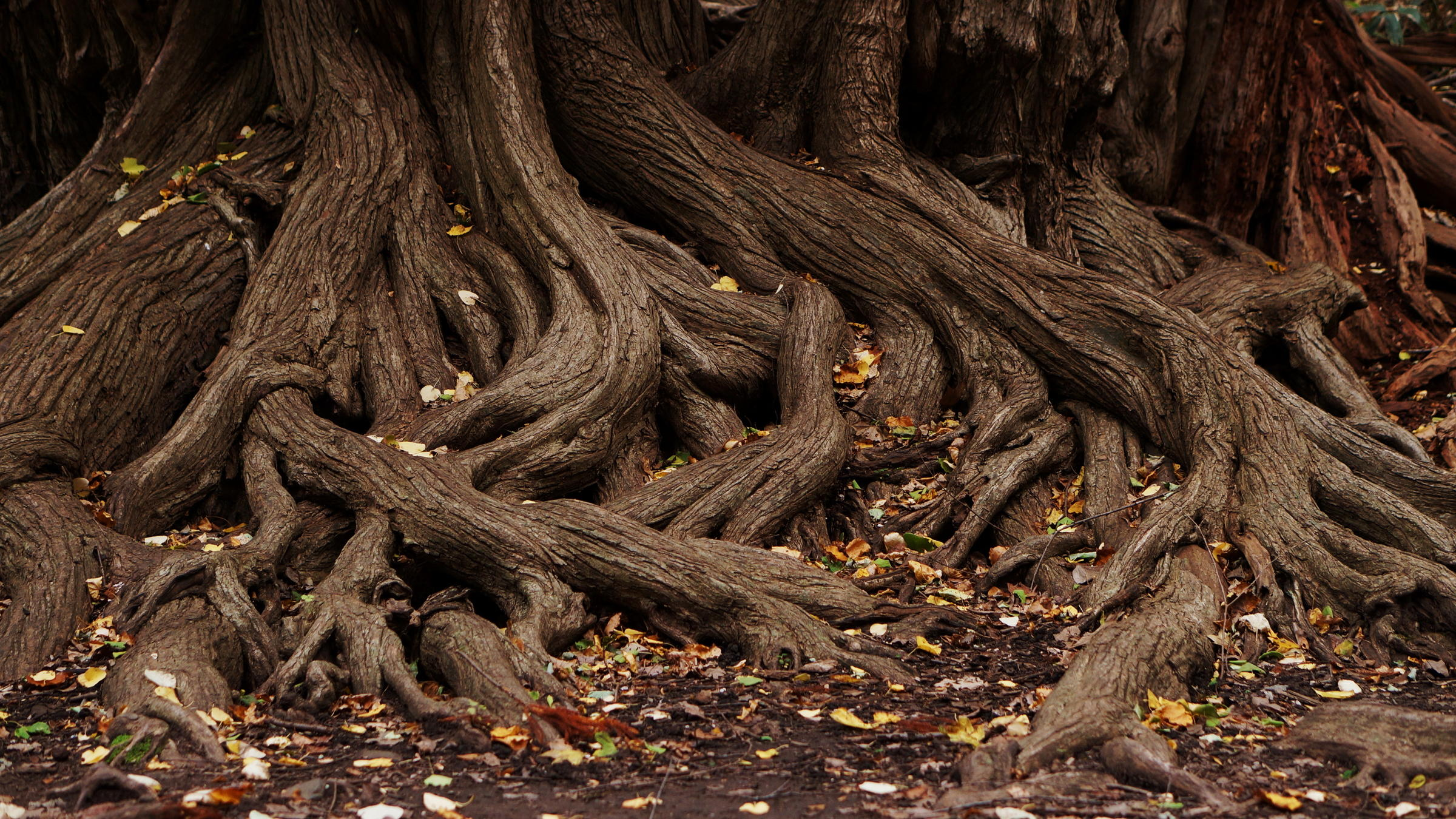 Roots photo
