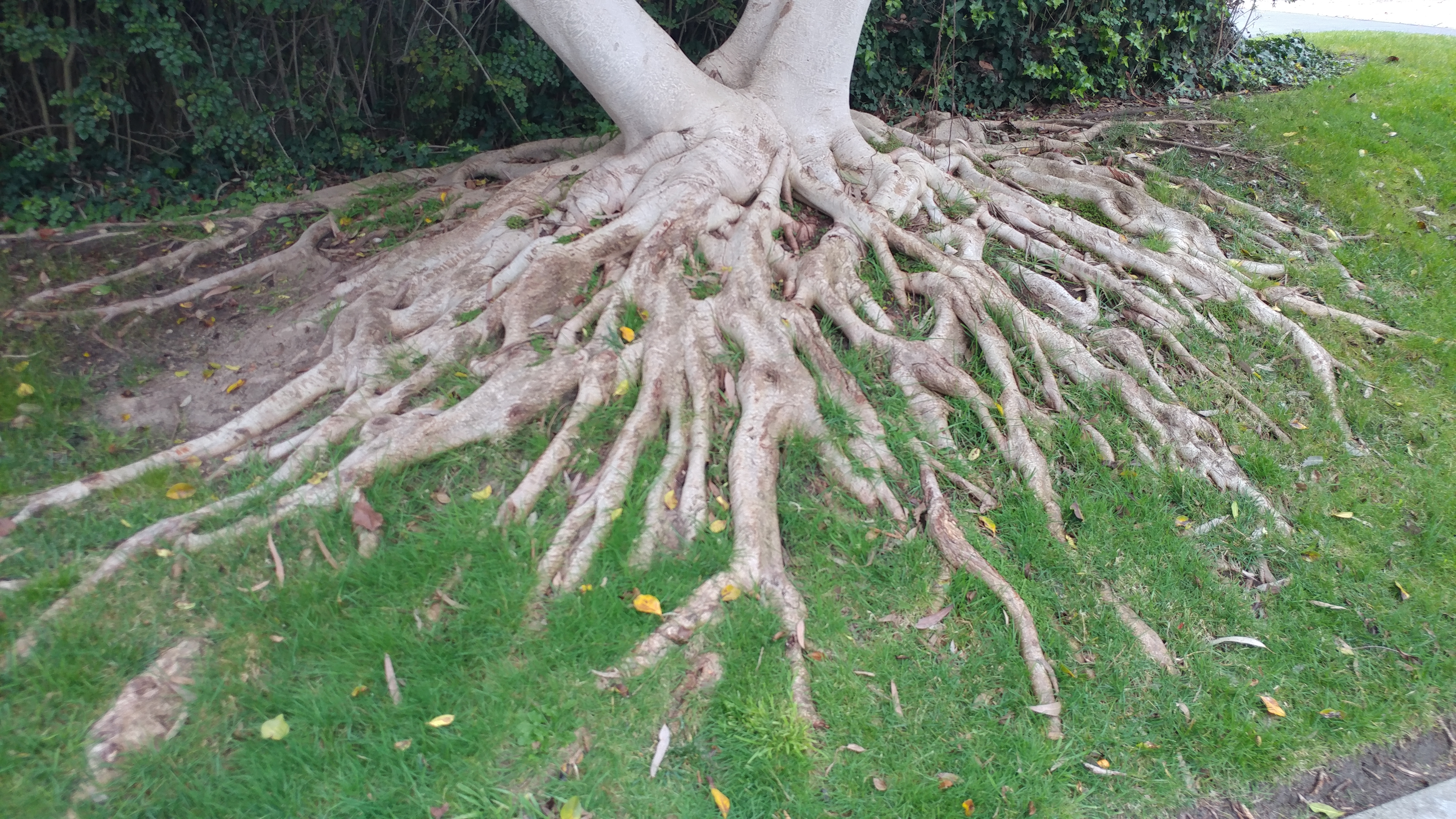 A Root Awakening   Heaviland Landscape Management