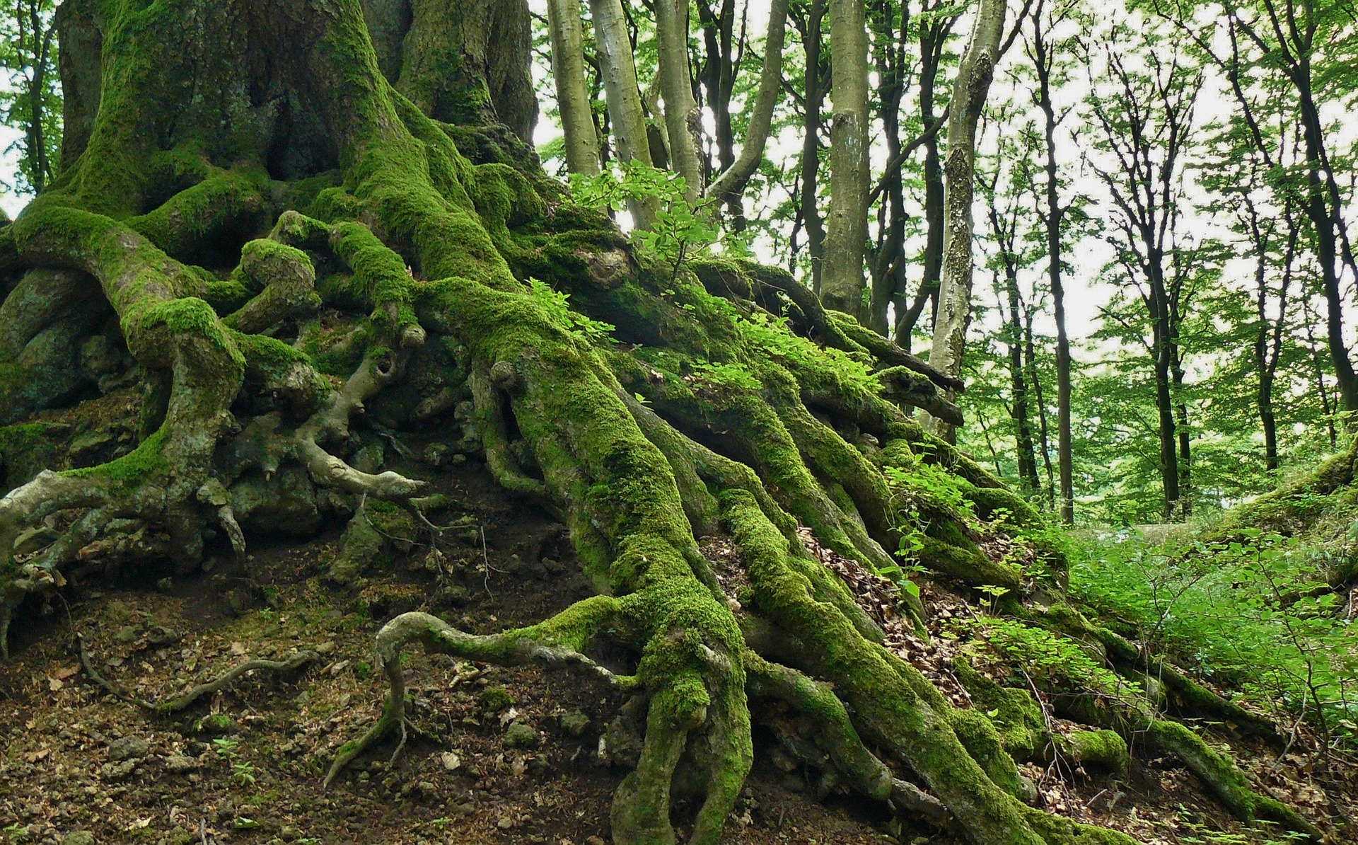 Roots, Forest, Jungle, Nature, Plant, HQ Photo