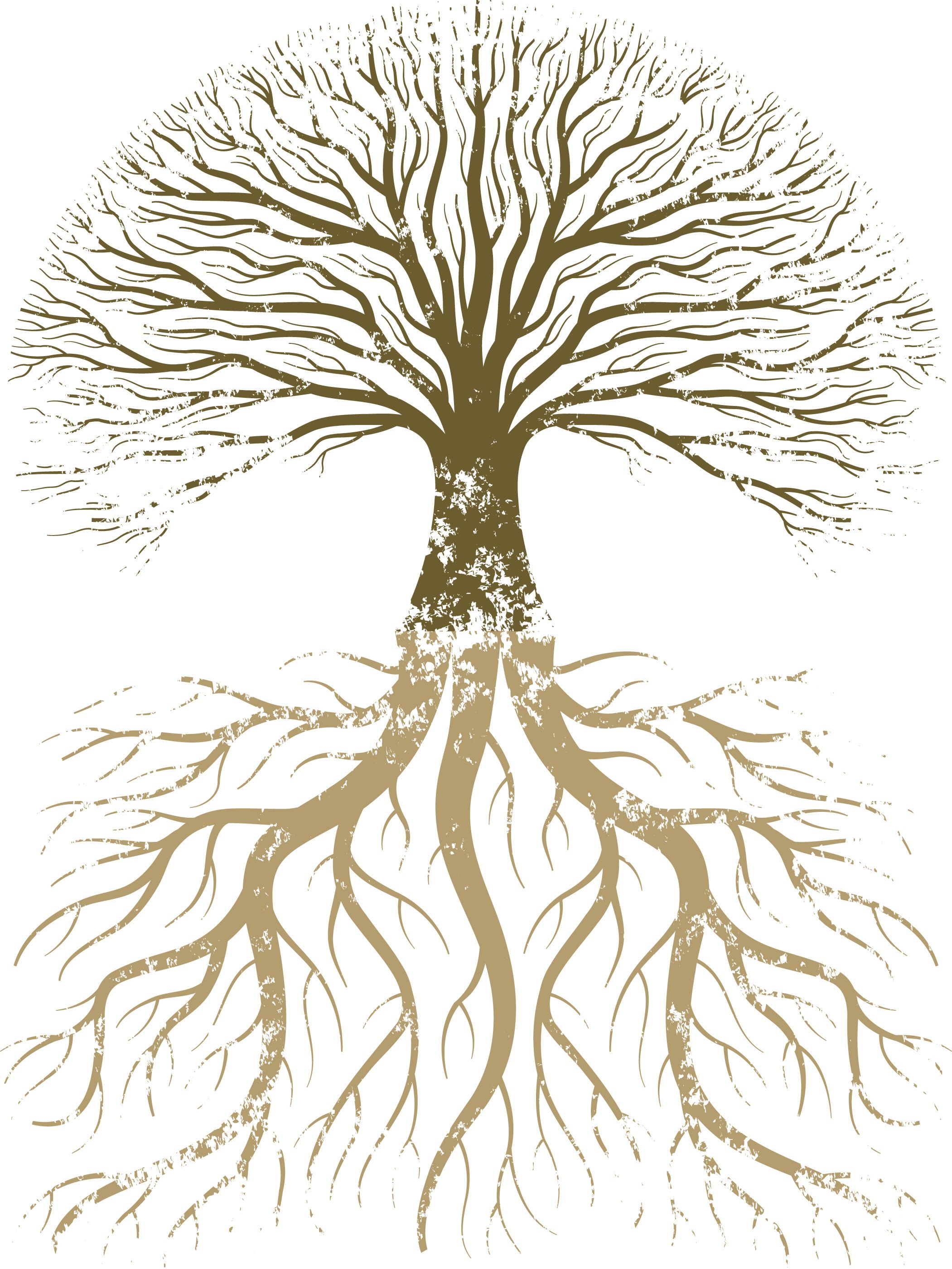 Roots of life photo