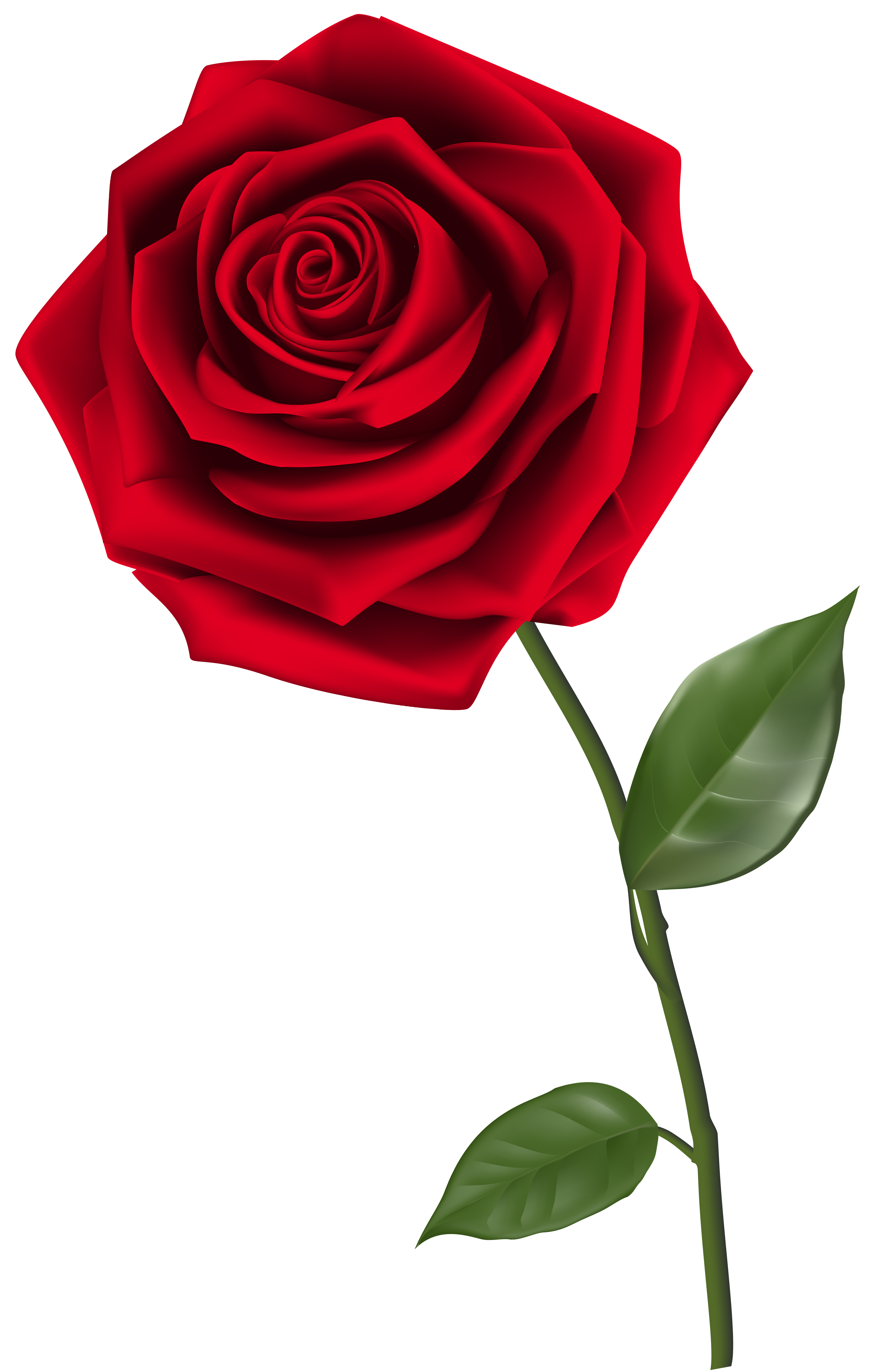 Single Red Rose PNG Clipart Image | Gallery Yopriceville - High ...