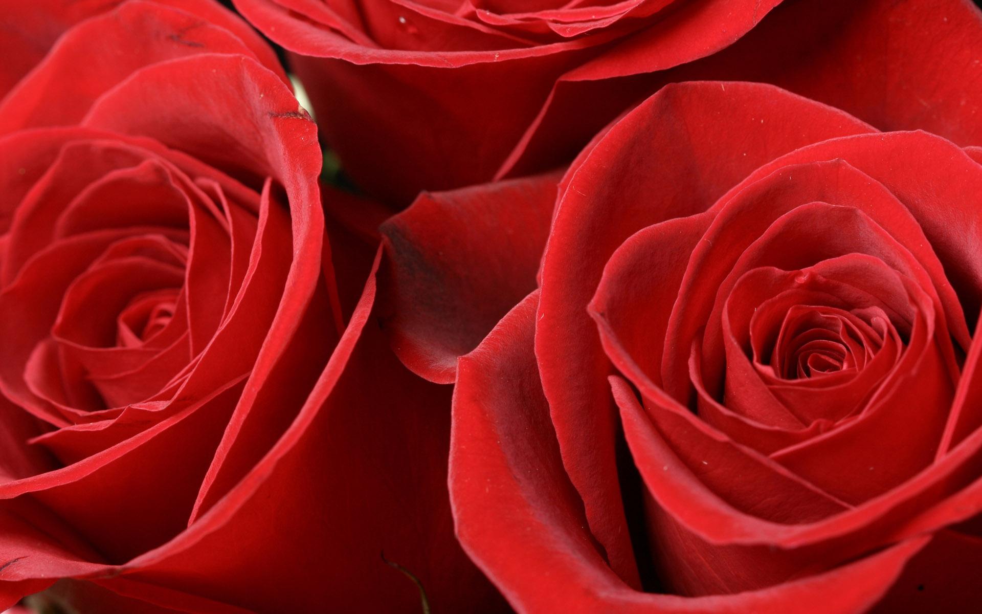 Rose Spagnuolo Obituary - Macomb Township, Michigan - Wujek ...