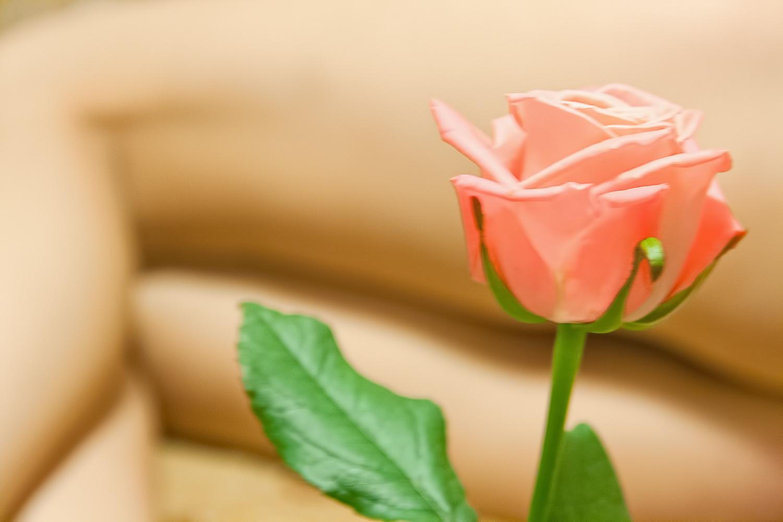 Rose, Body, Female, Flower, Foot, HQ Photo