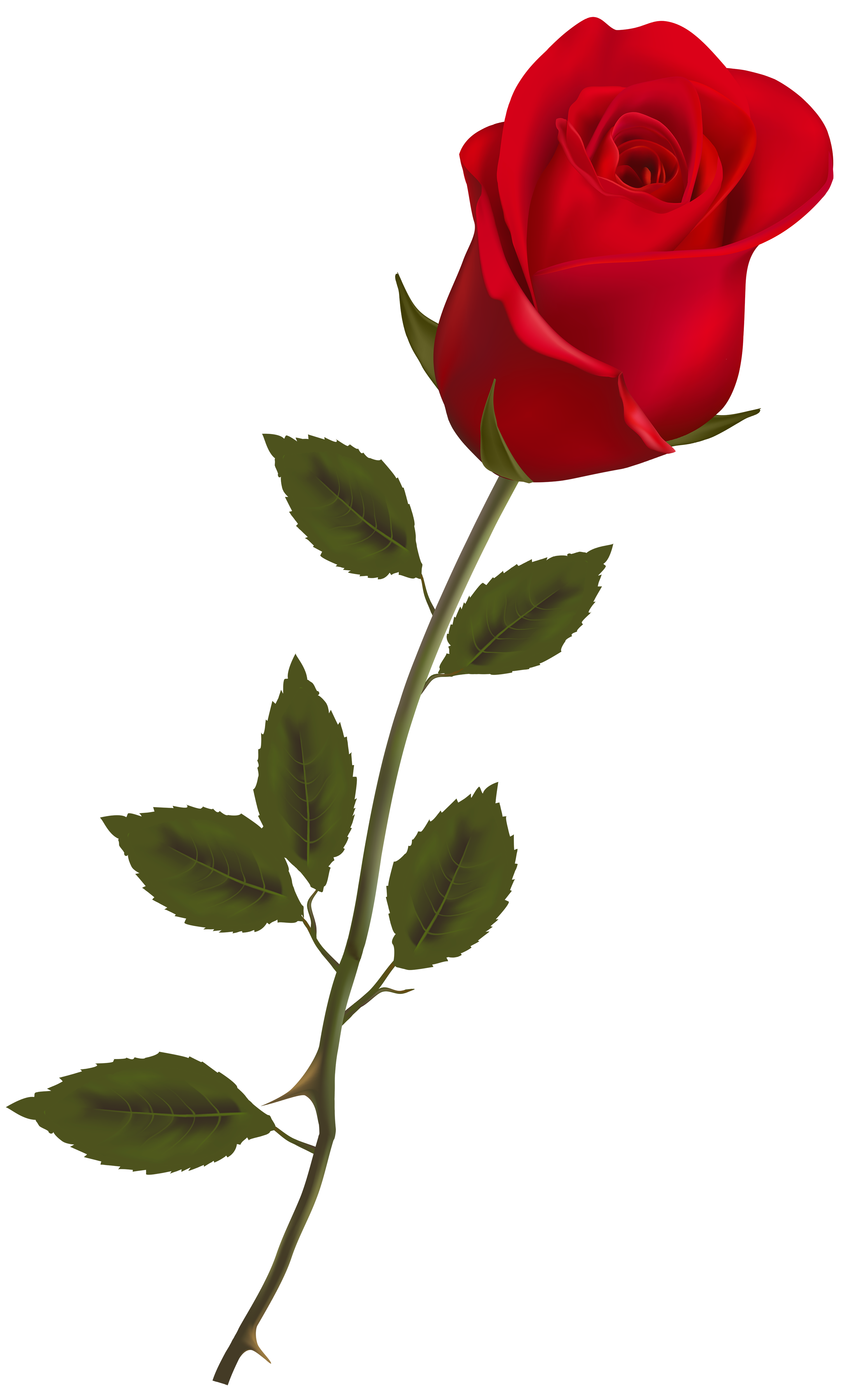 Beautiful Stem Red Rose PNG Clipart - Best WEB Clipart