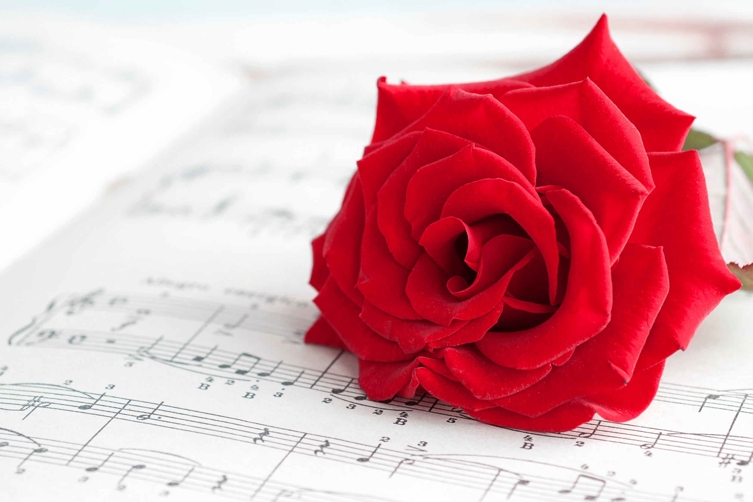 Rose and music photo