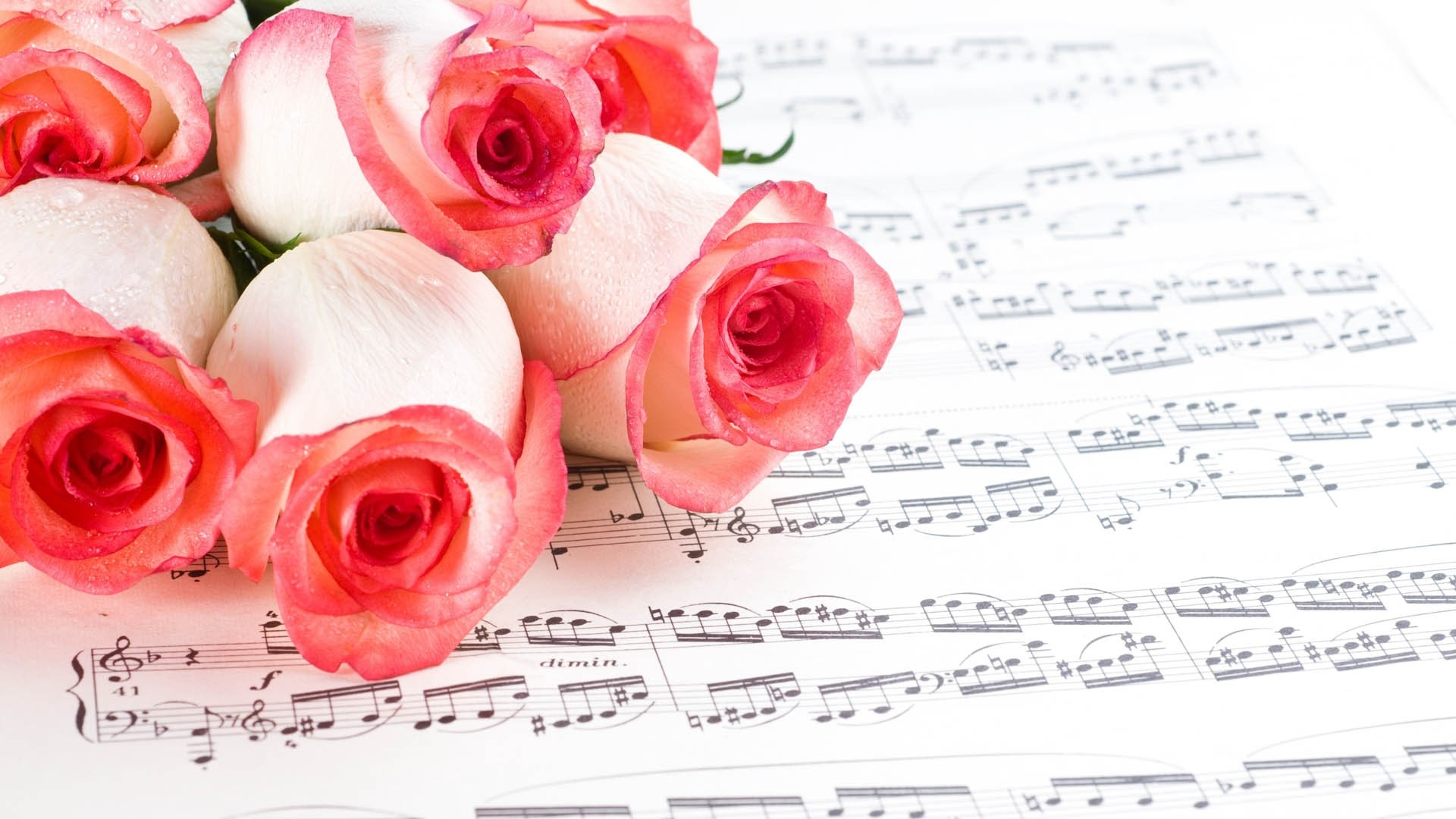 Free Photo Rose And Music Parchment Red Romance Non