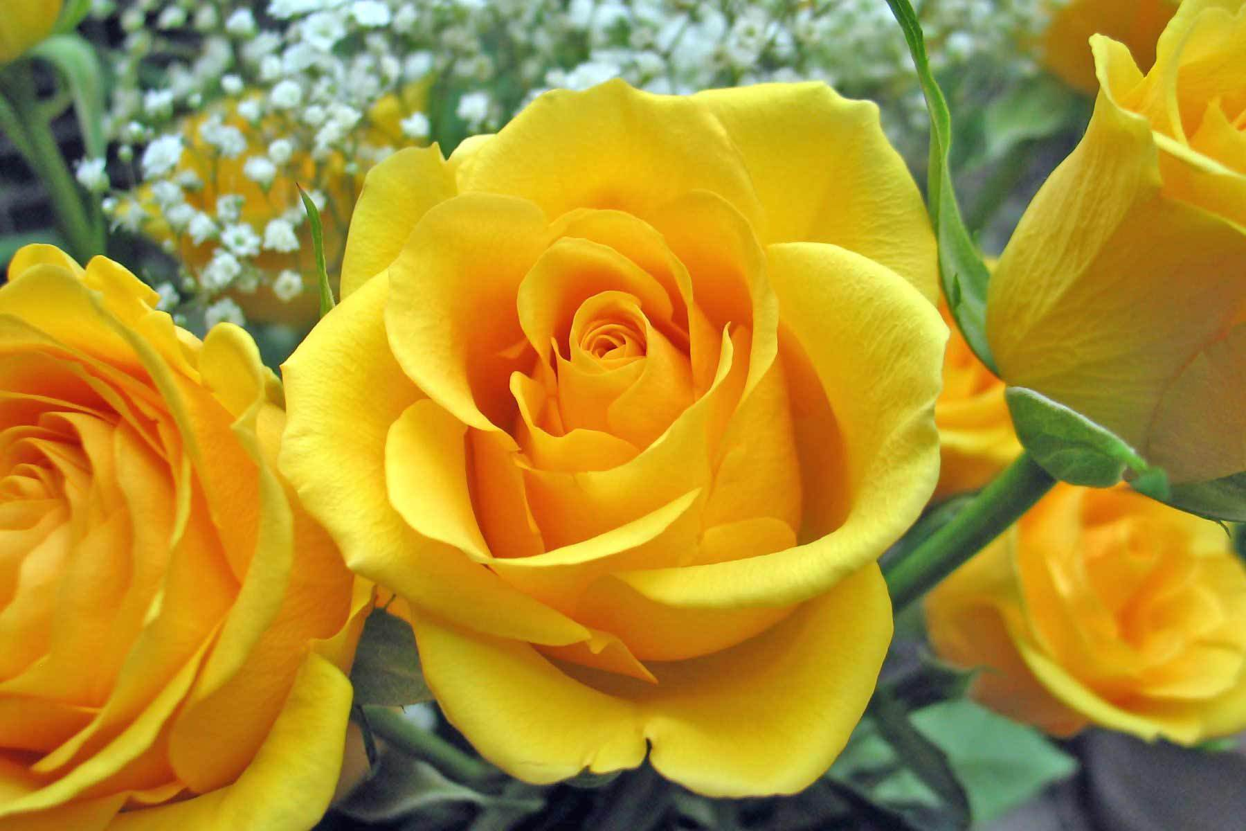 Feature Flower Friday: Yellow Roses - from Garden of Eden Flower Shop