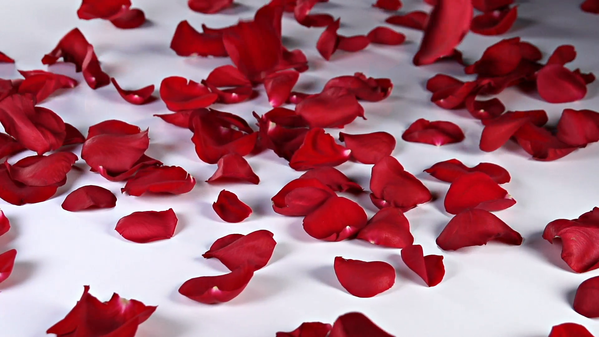 Red Rose Petals Falling Stock Video Footage - VideoBlocks