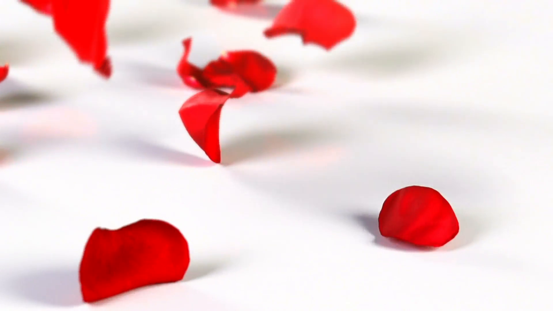 Red rose petals falling down Stock Video Footage - VideoBlocks