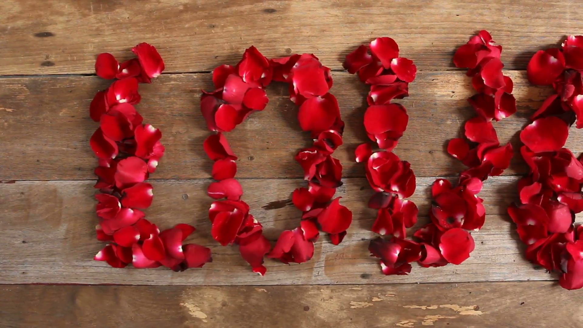 Wind blows red rose petals, Caption word love on wood background ...