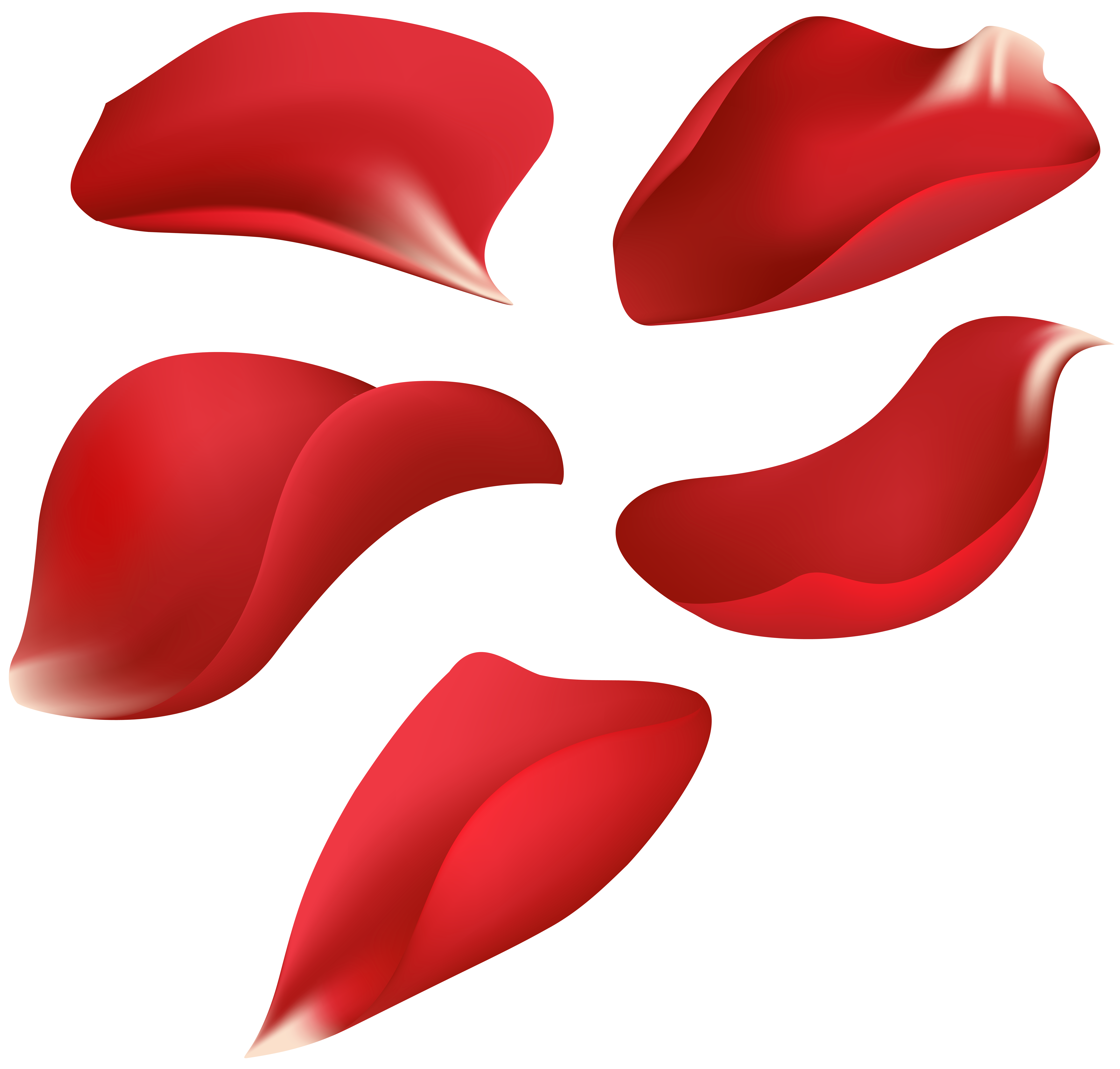 Red Rose Petals Transparent Clip Art Image | Gallery Yopriceville ...