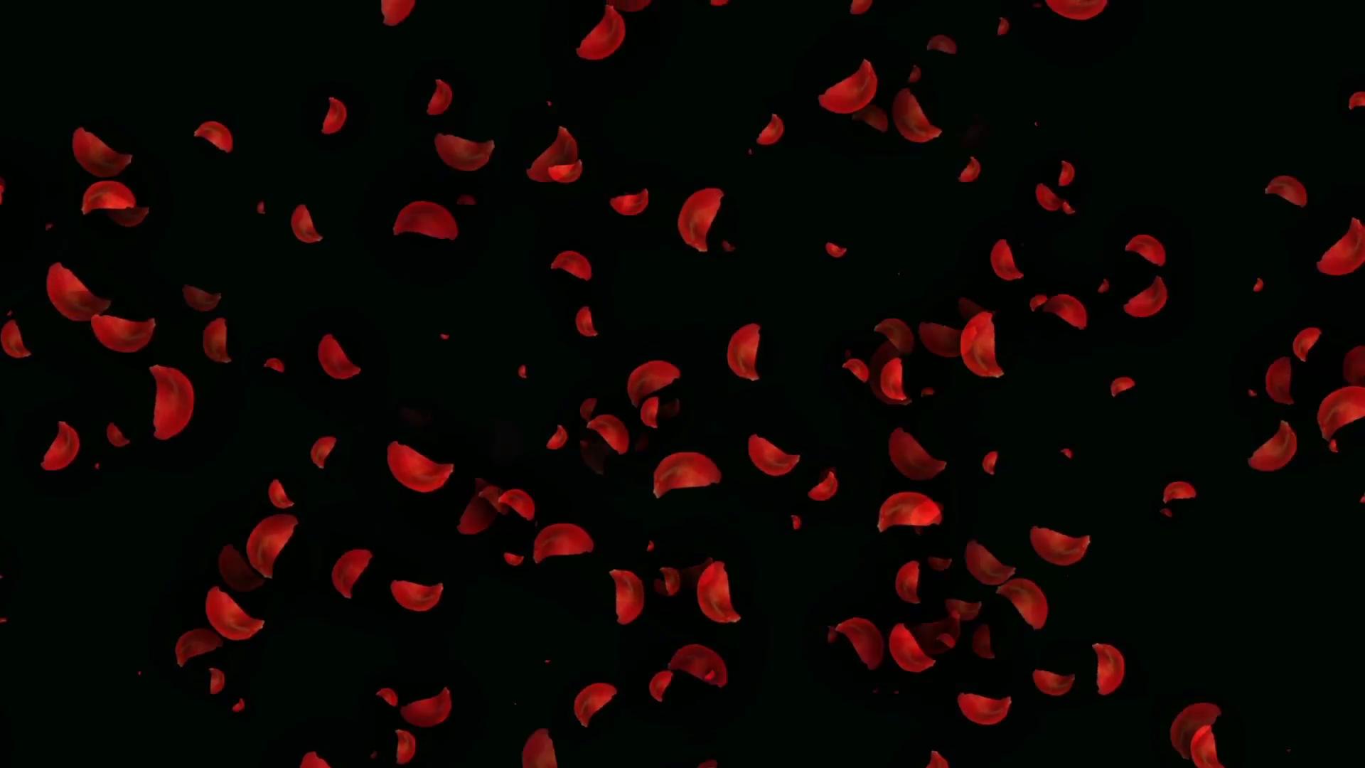 Falling Rose Petals on Black Motion Background - Videoblocks