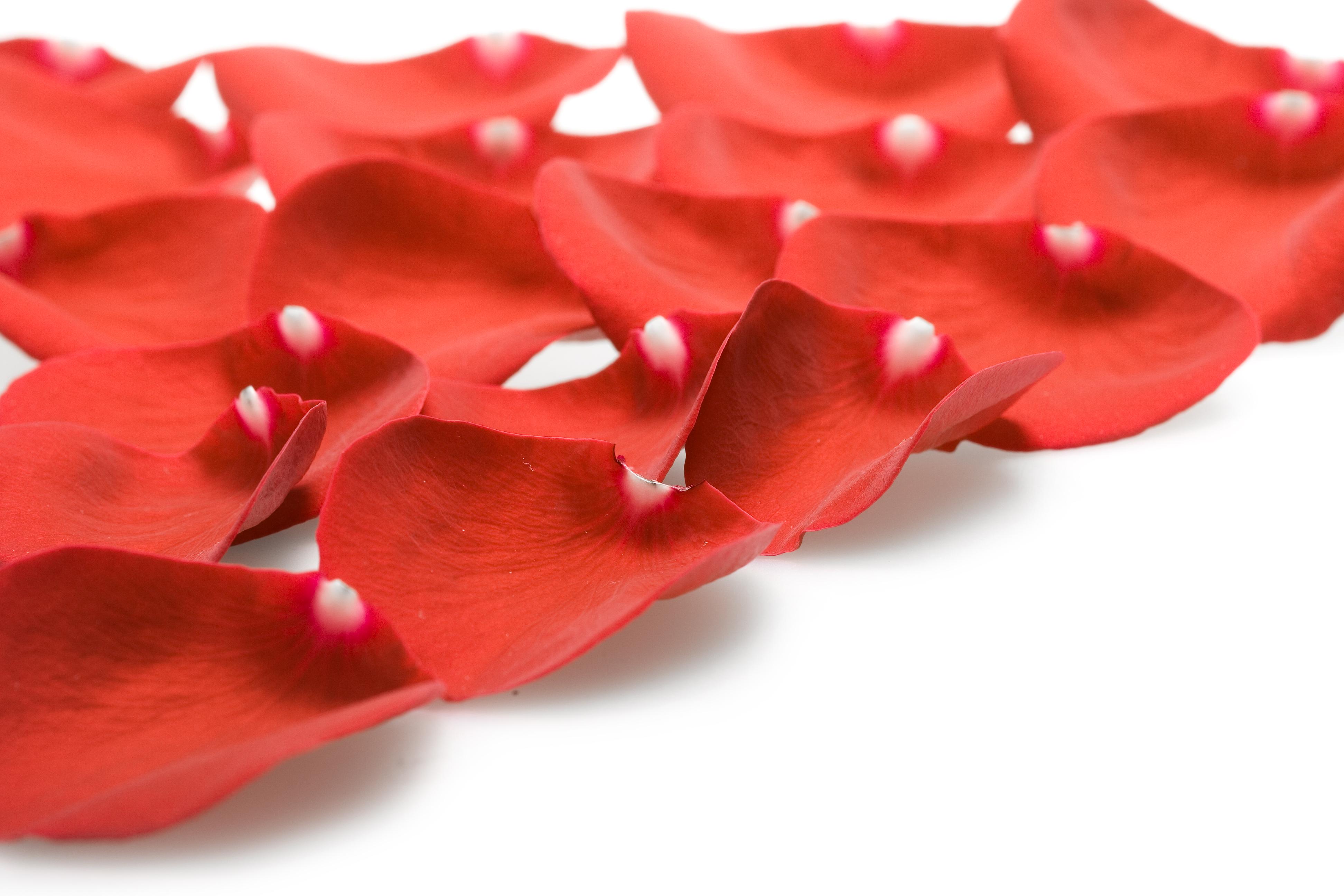 rose petals, 14, Pedal, Valentines, Valentine, HQ Photo