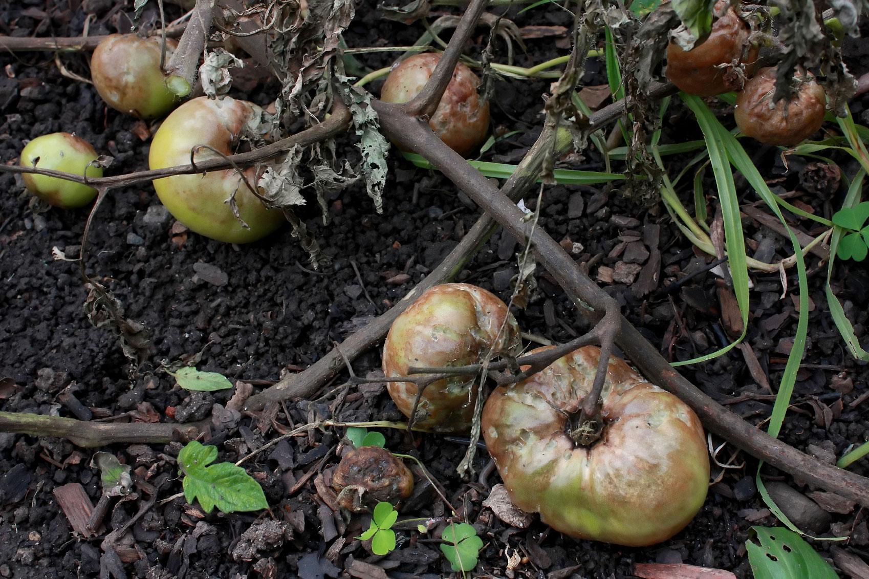 Rotten plants photo