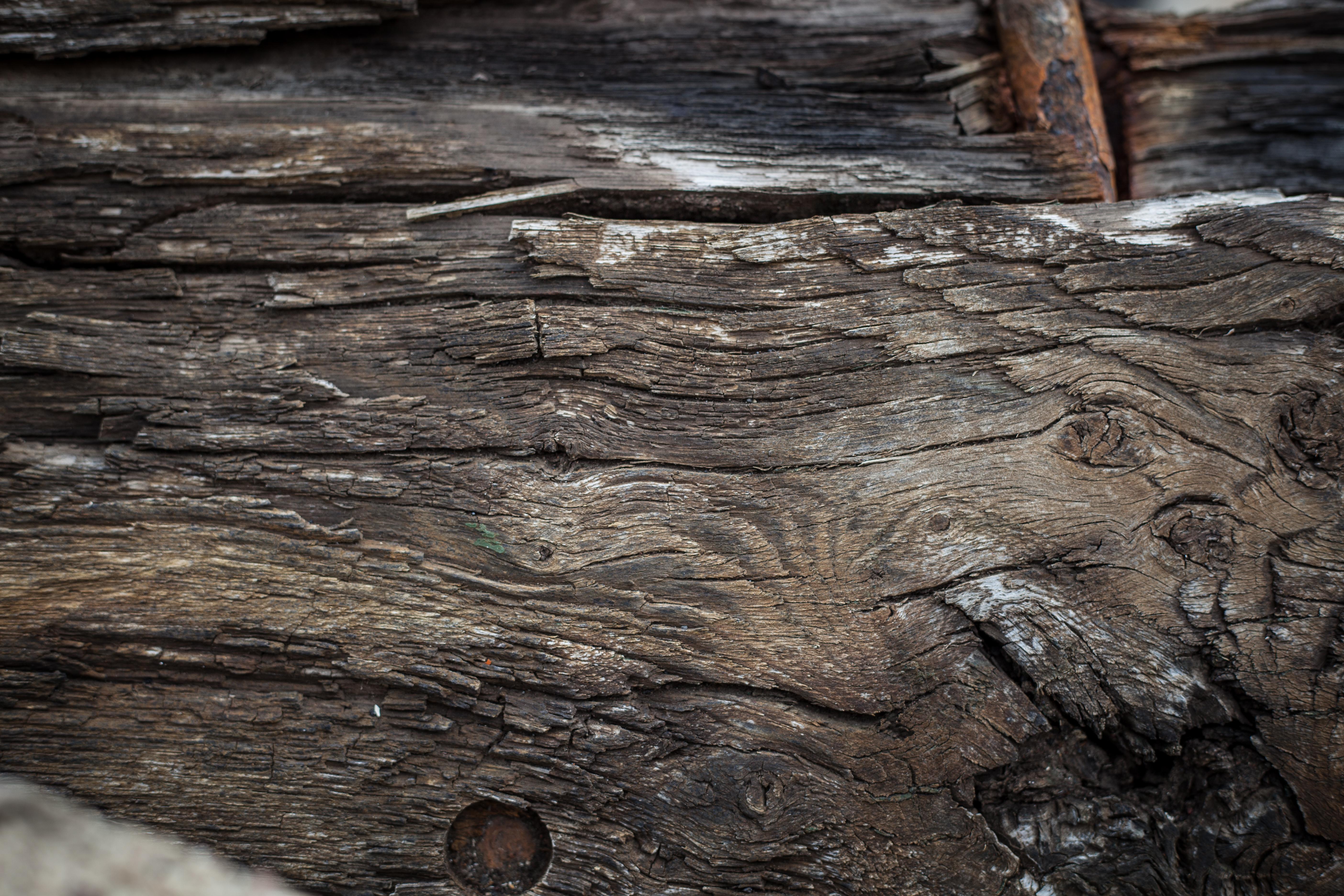Rotten Wood Texture, Old, Wood, Vintage, Tree, HQ Photo