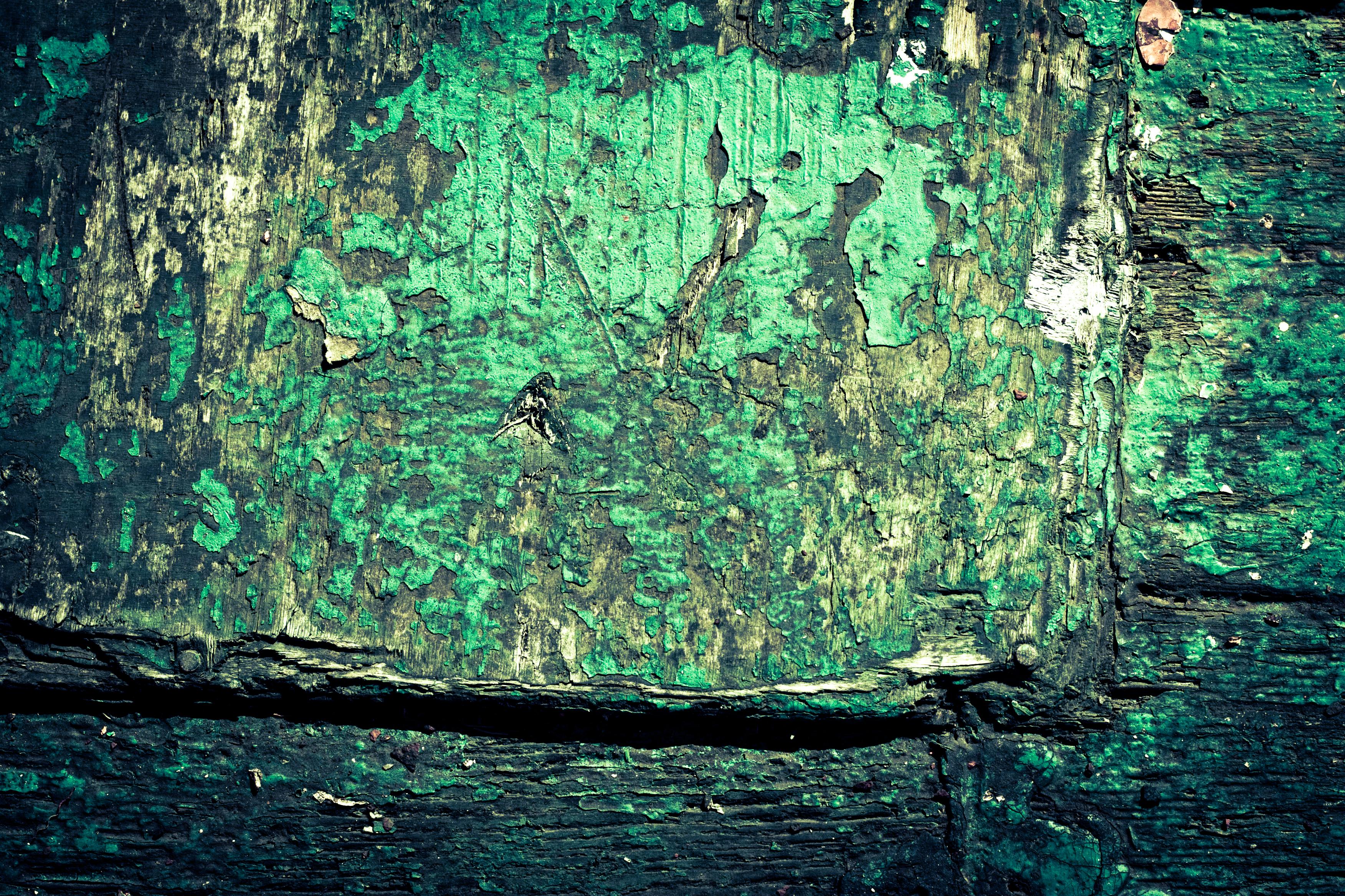Rotten wood texture photo