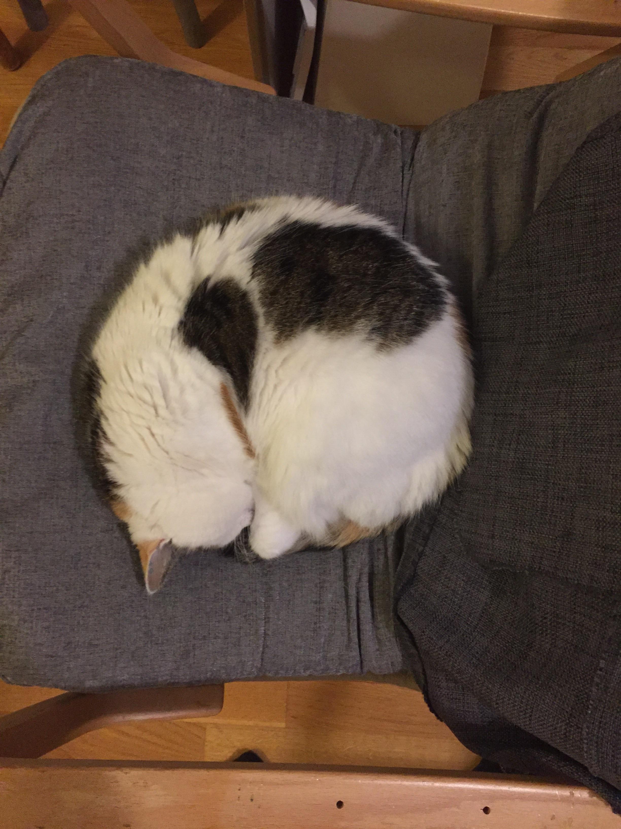 My very round cat : aww