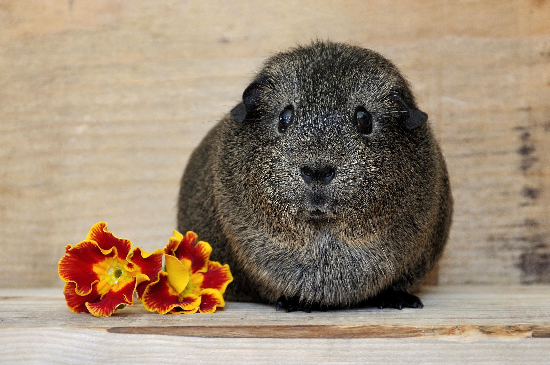 Round, Adorable, Animal, Cute, Friend, HQ Photo