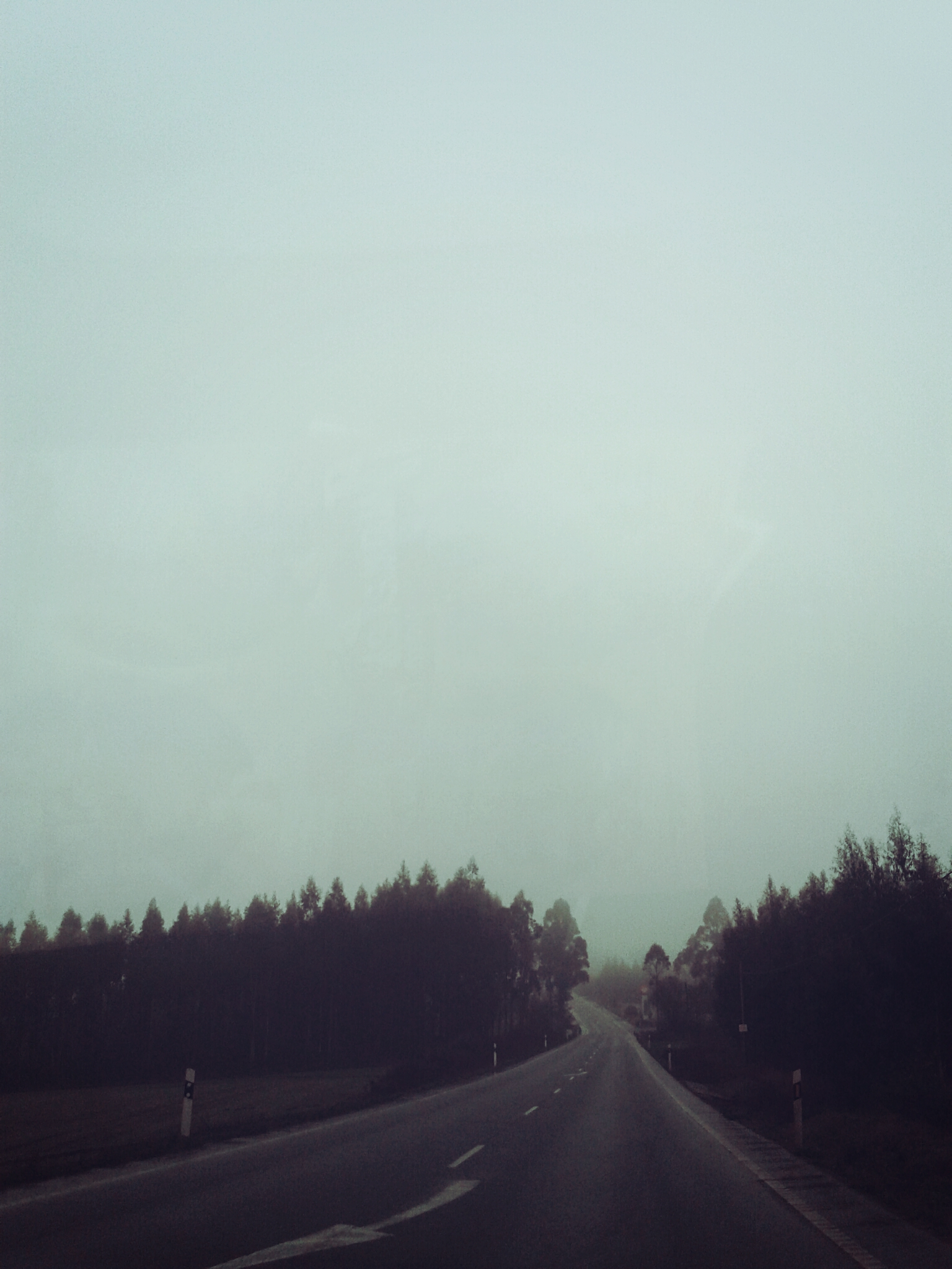 Route, Forest, Haze, Jungle, Nature, HQ Photo