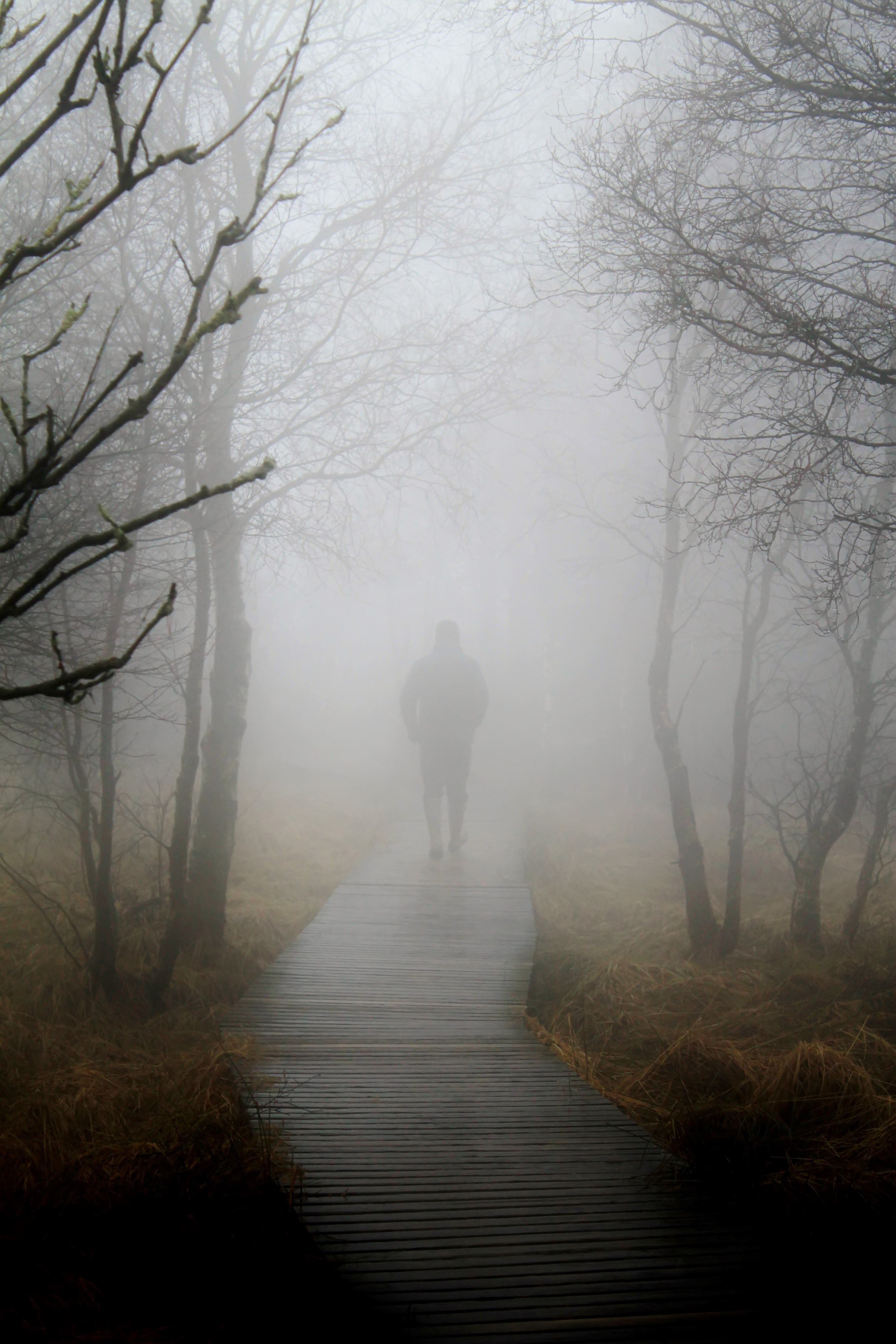 Route, Activity, Fog, Foggy, Human, HQ Photo