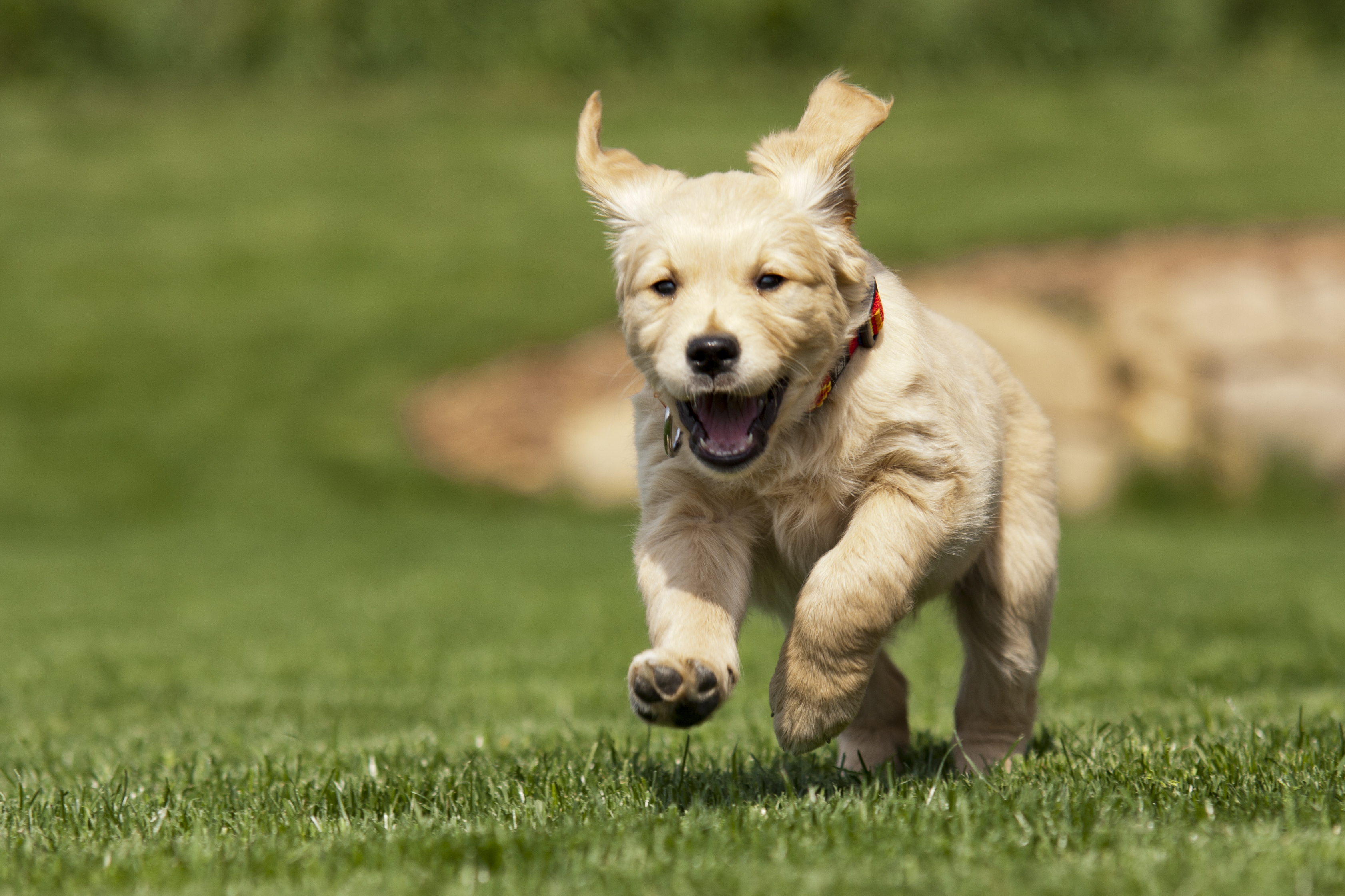 Is Your Puppy Old Enough To Run With You?