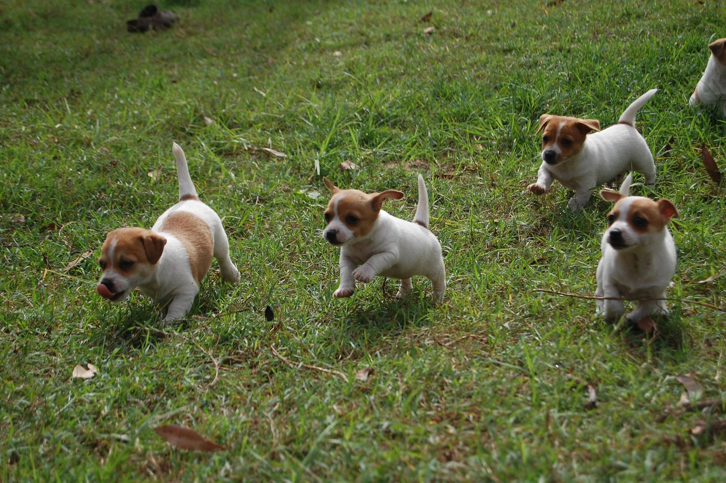 Death By Puppy Stampede: 8 Adorable Pics – iHeartDogs.com