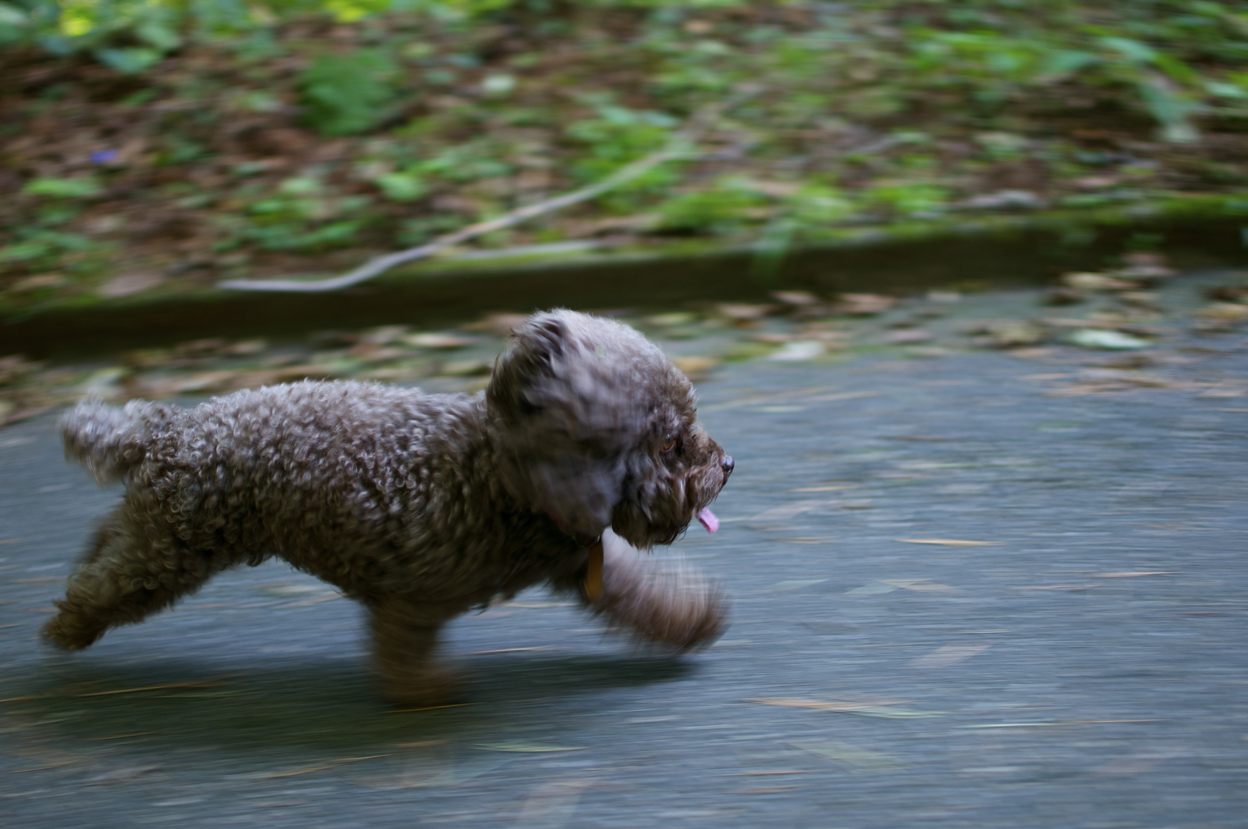 Running Pup, Dog, Friend, Loyal, Pet, HQ Photo