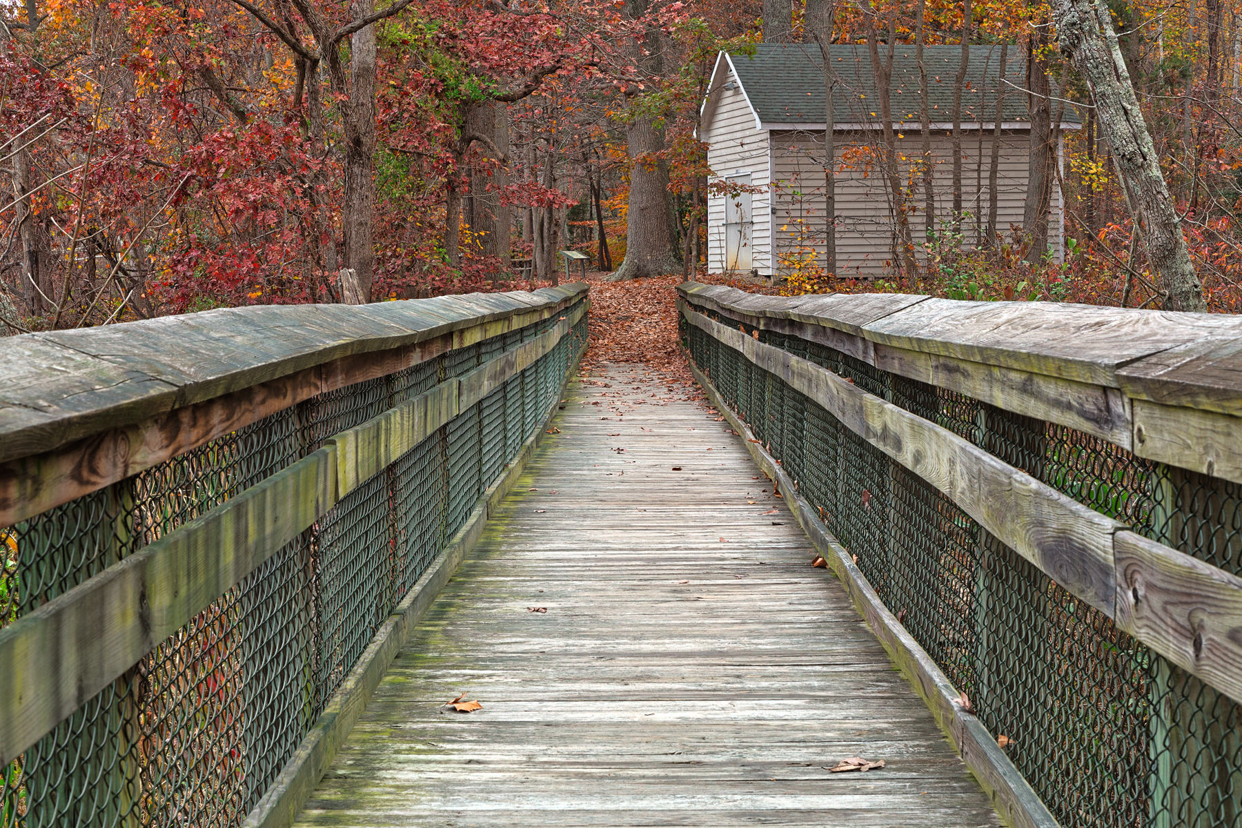Rustic autumn boardwalk - hdr photo
