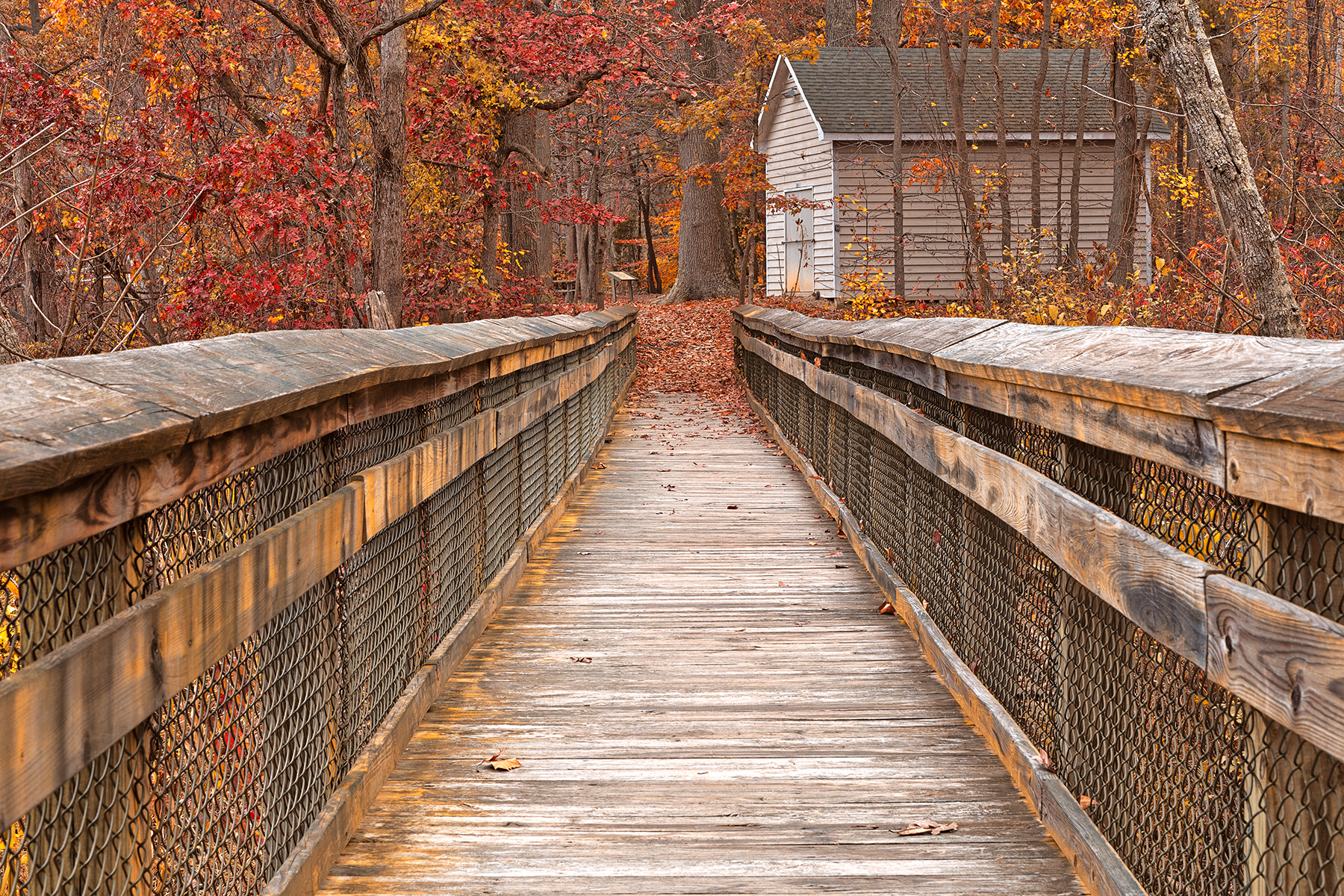 Rustic autumn boardwalk - ruby gold hdr photo