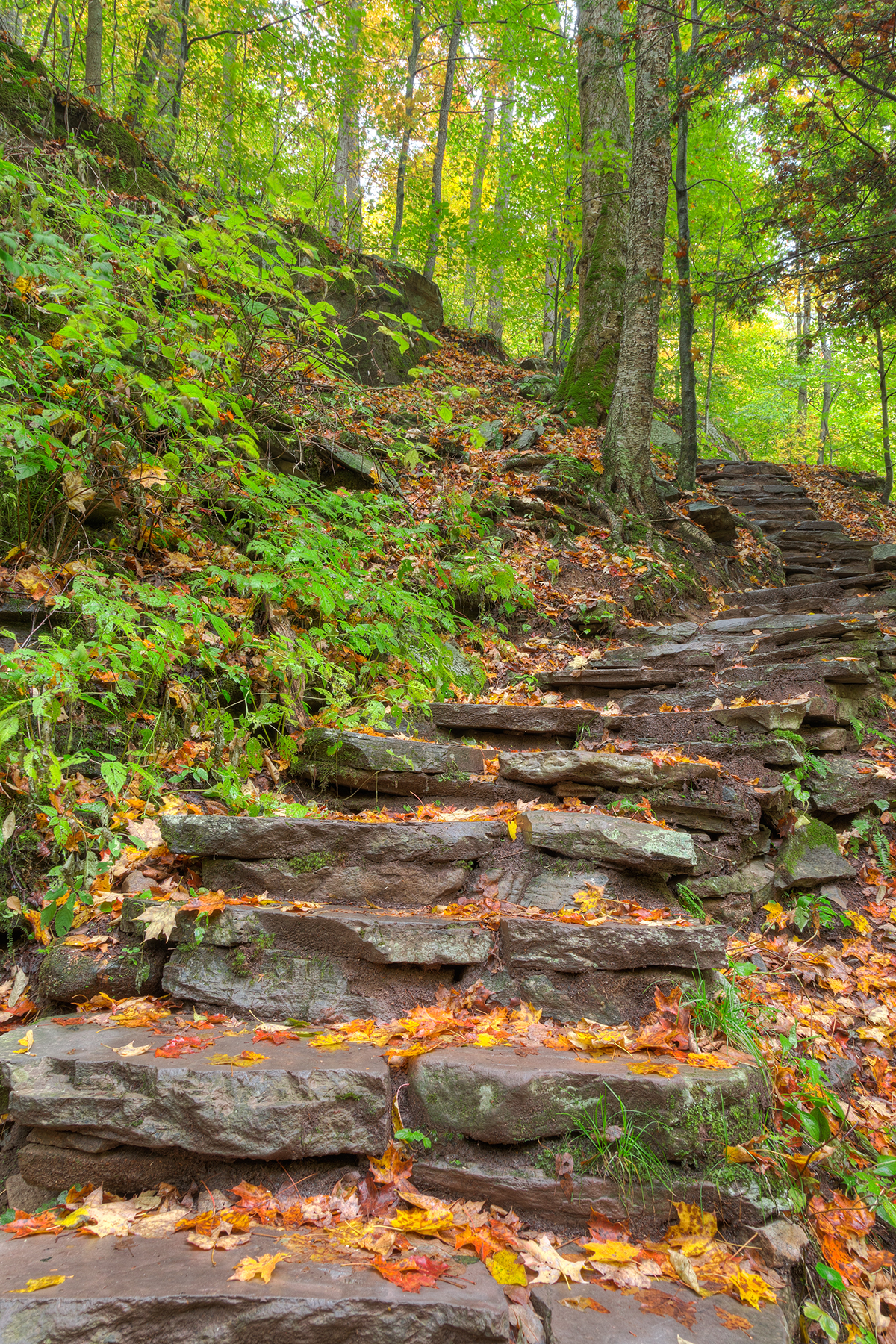 Rustic autumn staircase - hdr photo