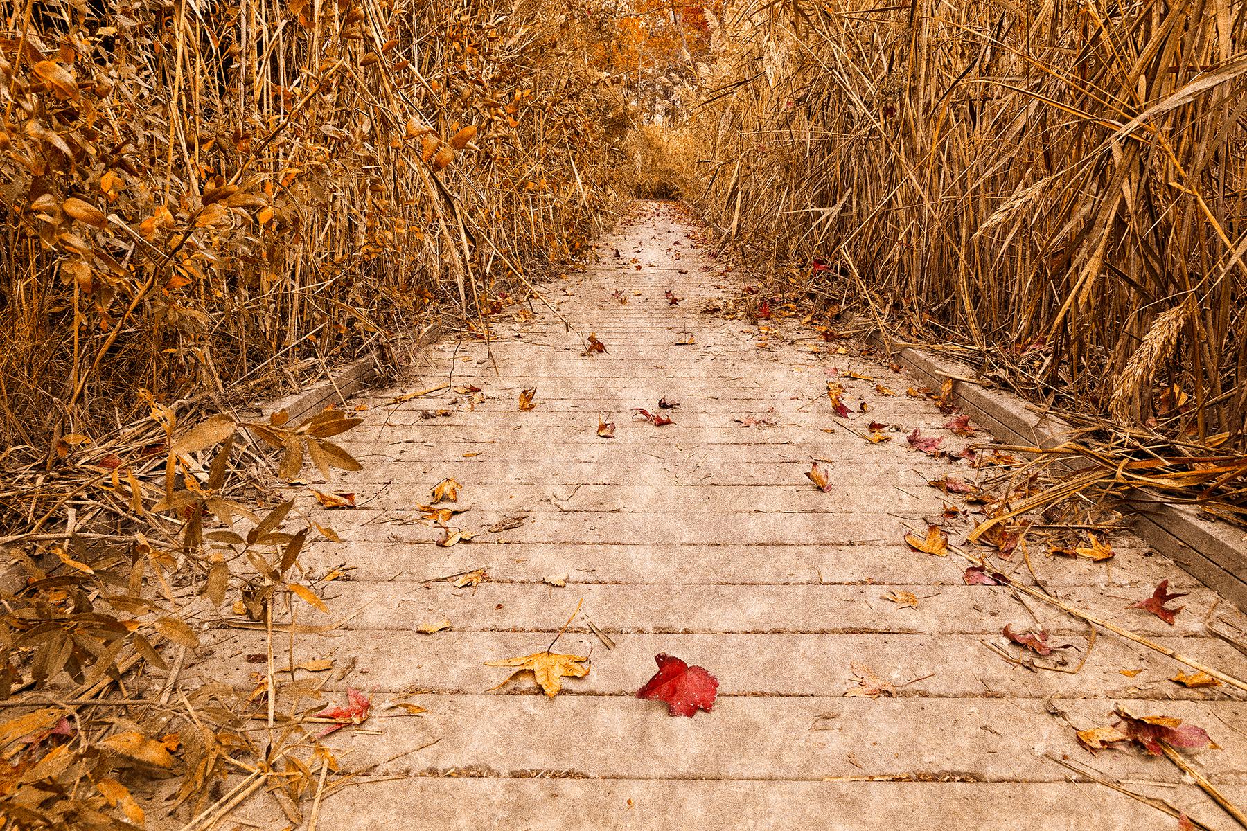 Rustic Marsh Boardwalk, Age, Surreal, States, Smyrna, HQ Photo