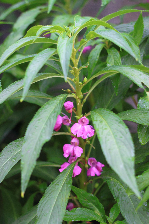Plant World: July 2014