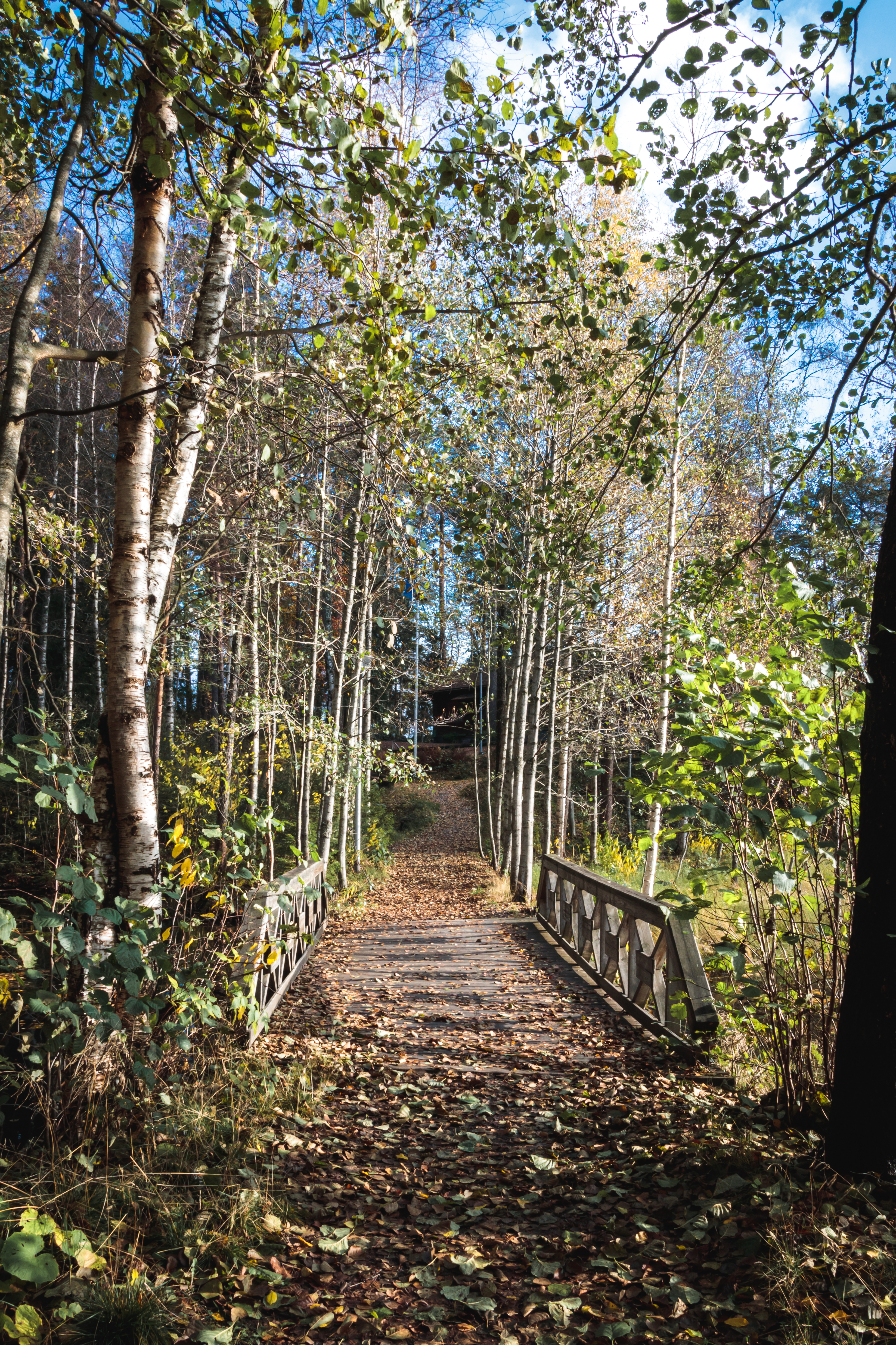 Saaren kansanpuisto, tammela, finland photo