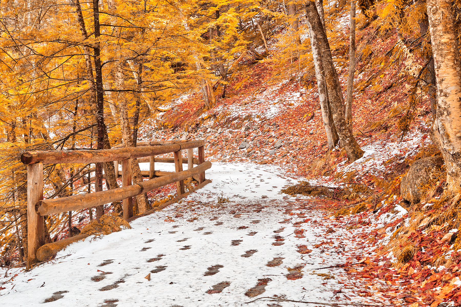 Sabbaday winter forest trail - amber gold fantasy hdr photo